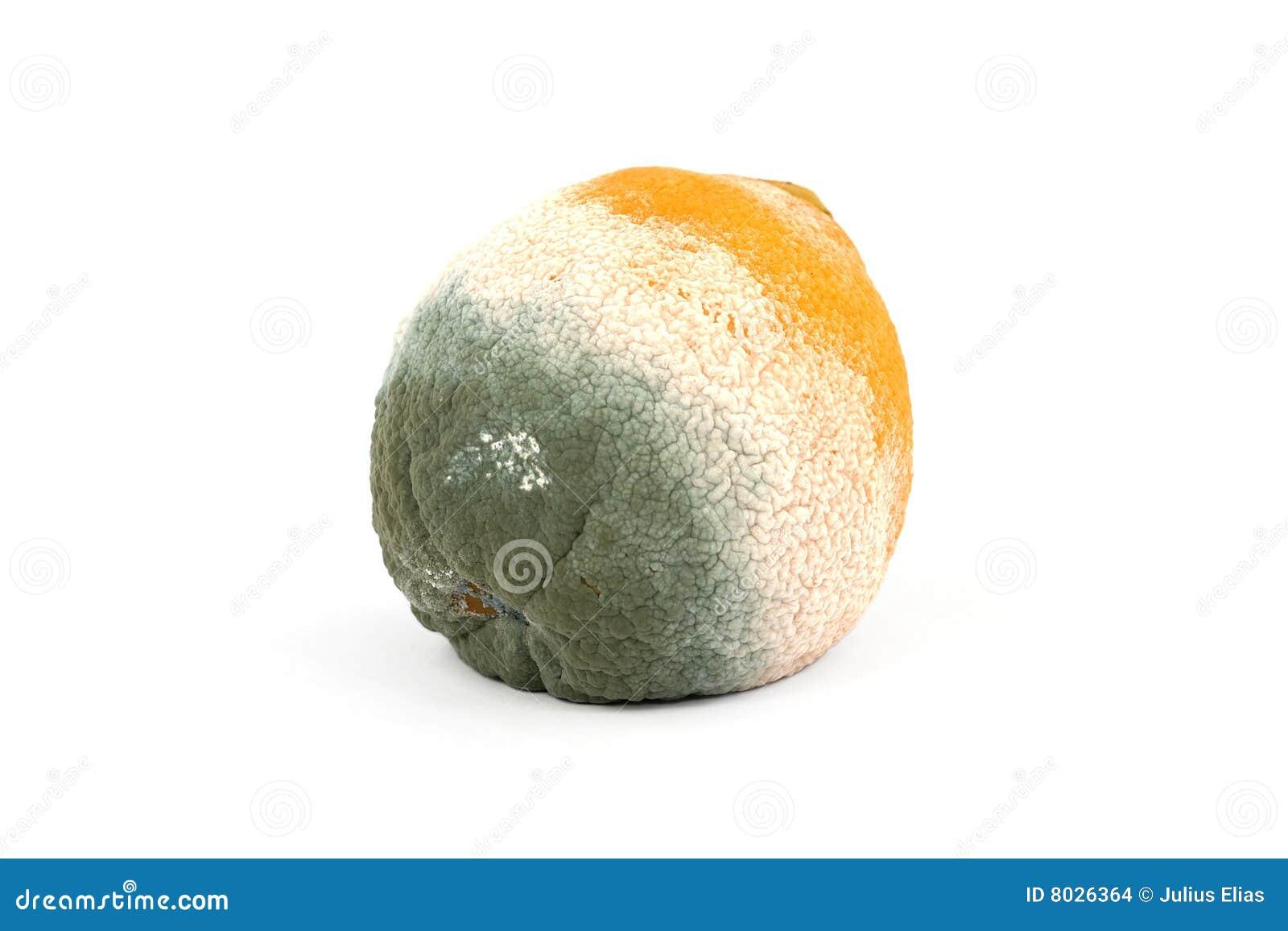 Schimmelige faule Orange