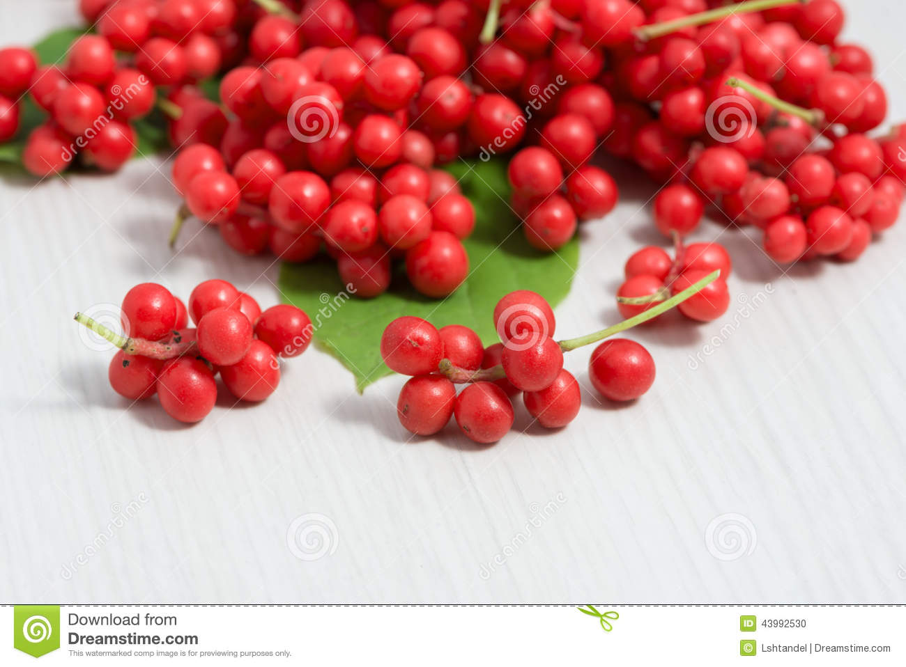 schisandra chinensis fruit and berries stock photo image 43992530. Black Bedroom Furniture Sets. Home Design Ideas