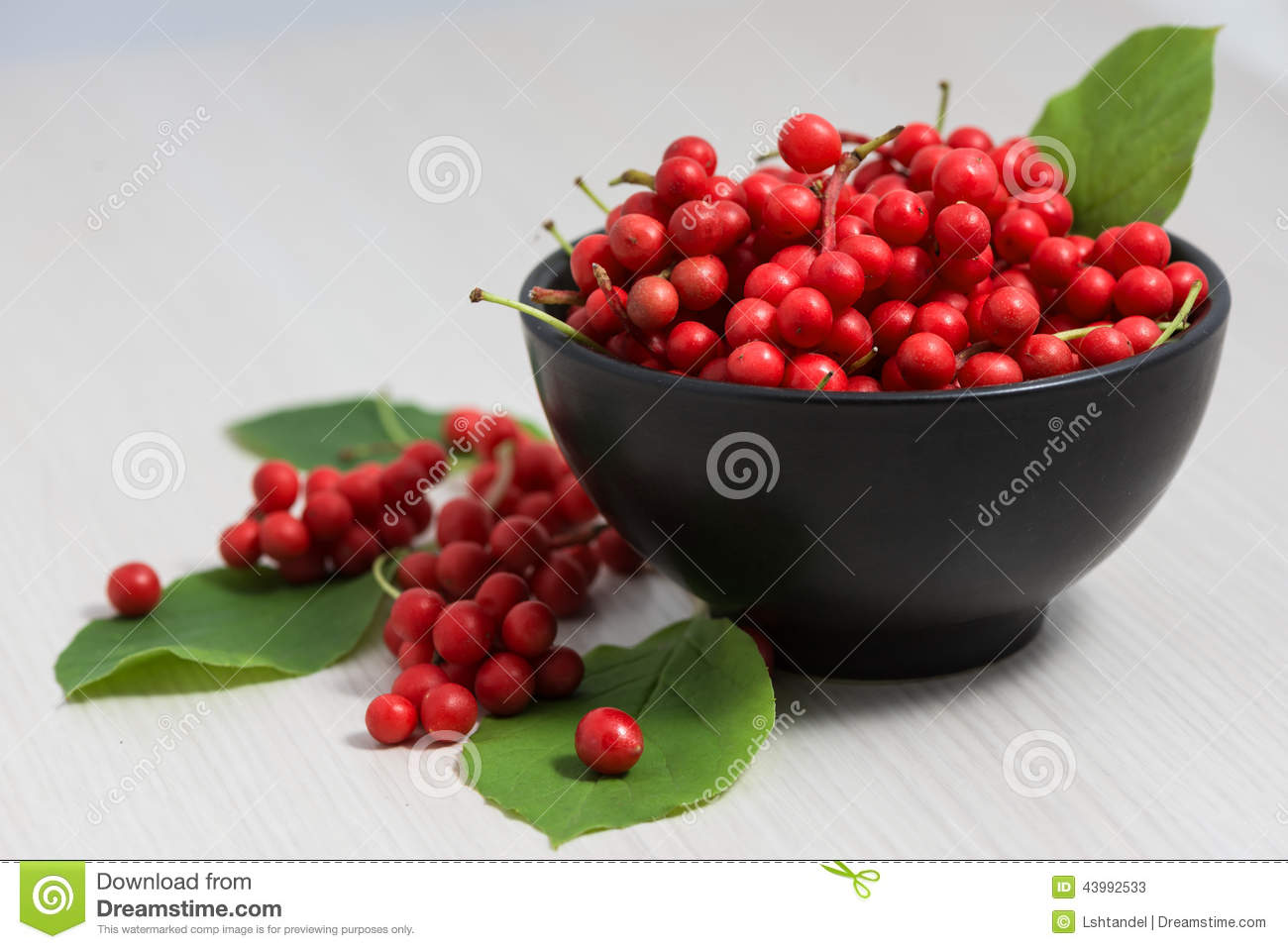 schisandra chinensis fruit and berries stock photo image 43992533. Black Bedroom Furniture Sets. Home Design Ideas