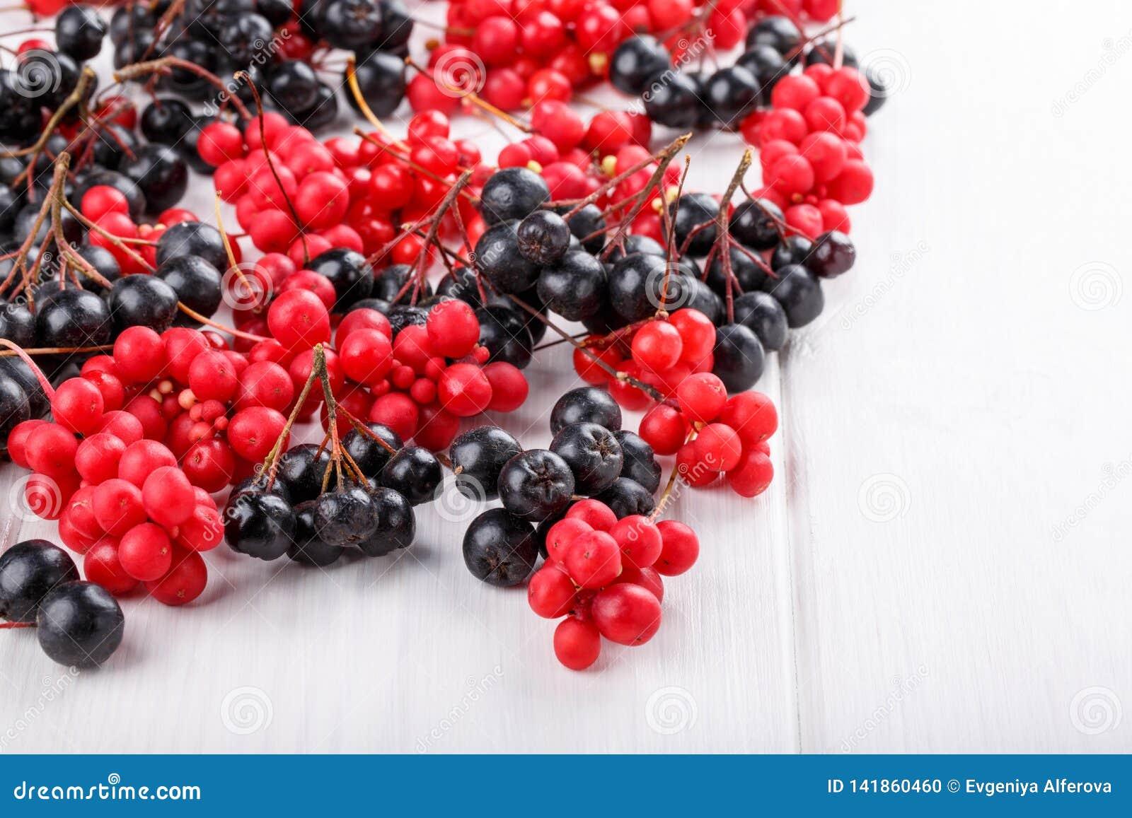 Schisandra chinensis o baya del cinco-sabor Aronia o chokeberry