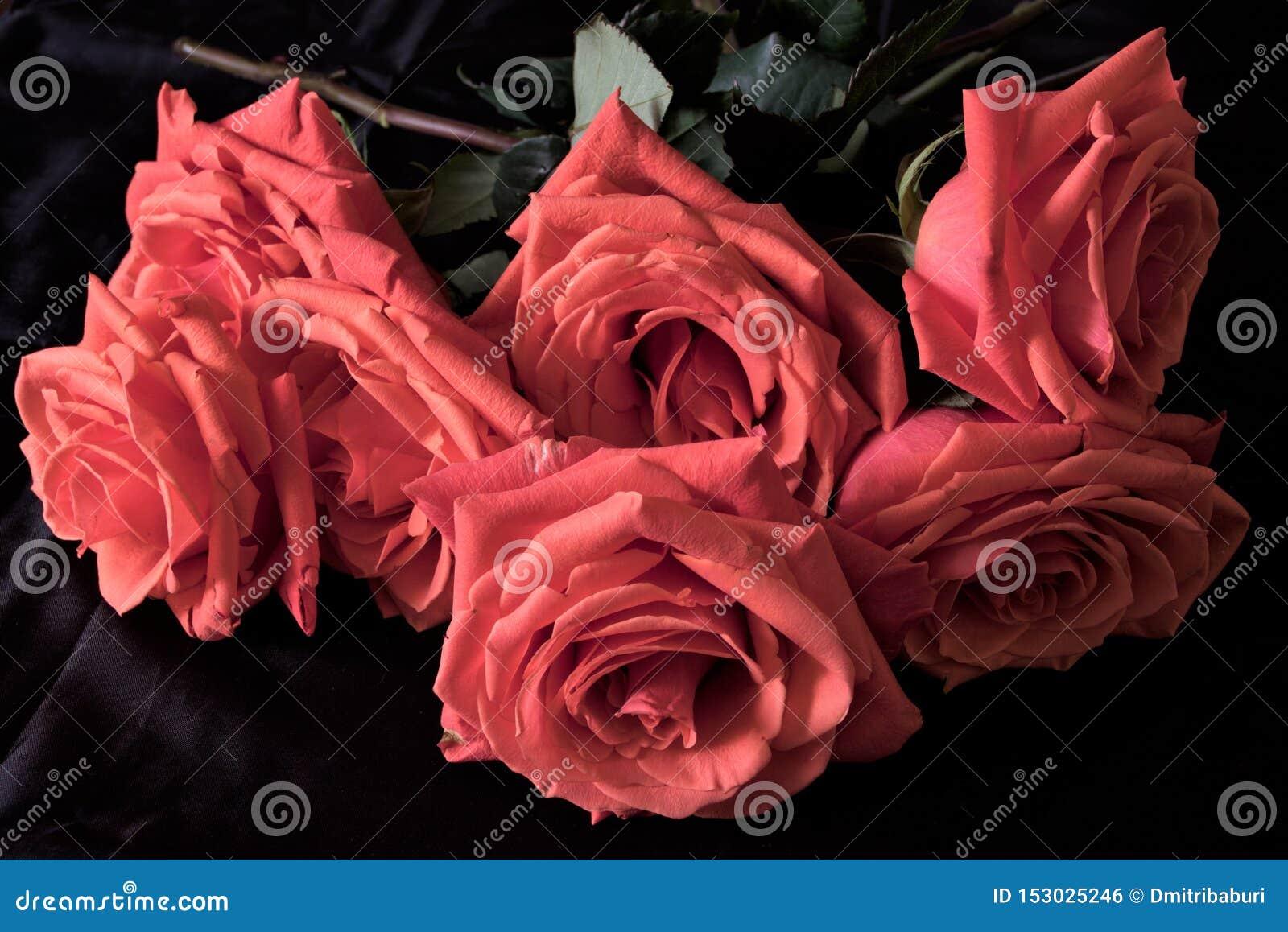 Schitterende red-brick rozen op een zwarte achtergrond als basis van de achtergrond