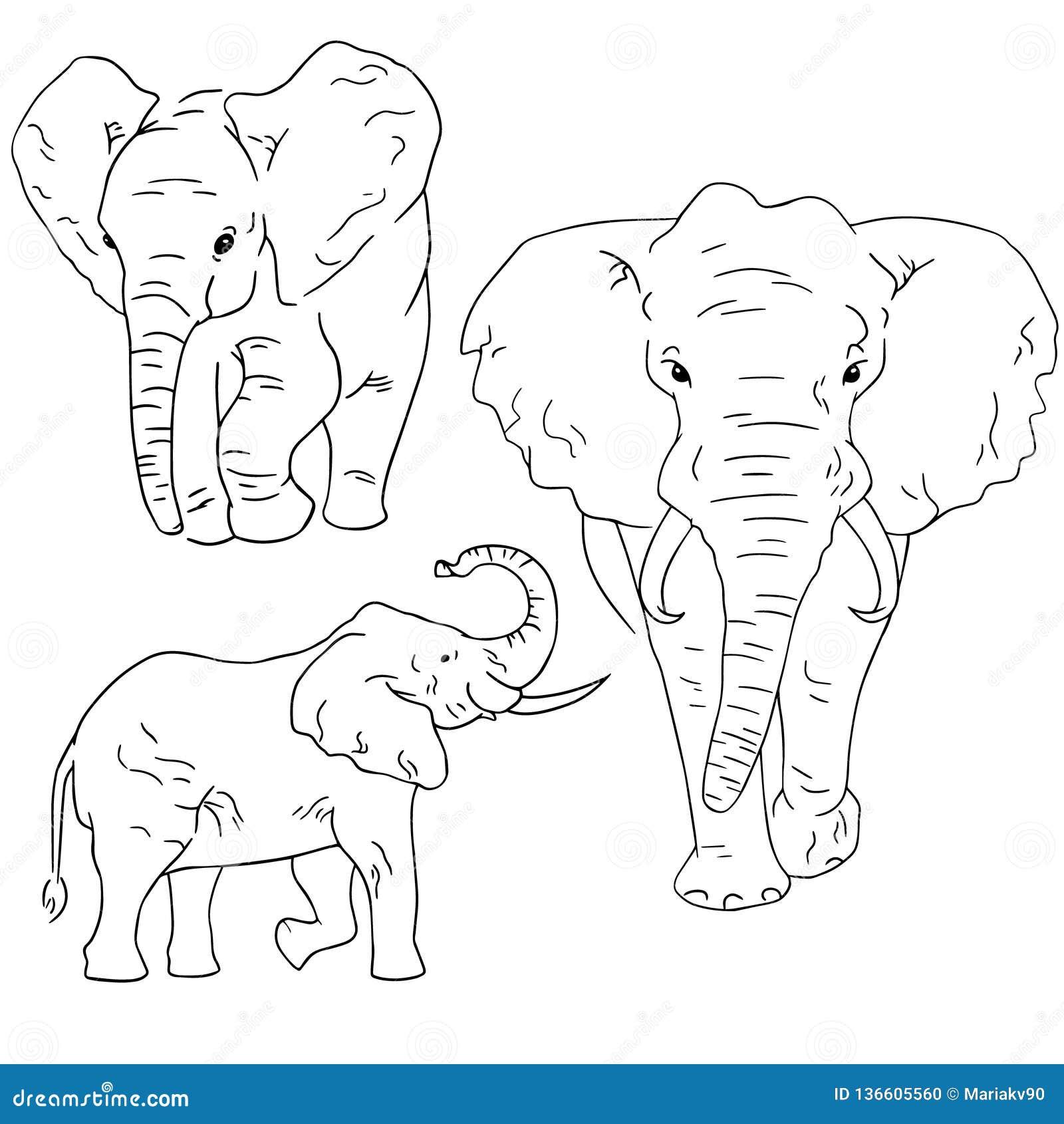 Schizzi dell elefante su fondo bianco Metta di schizzo degli animali disegnati da a mano libera