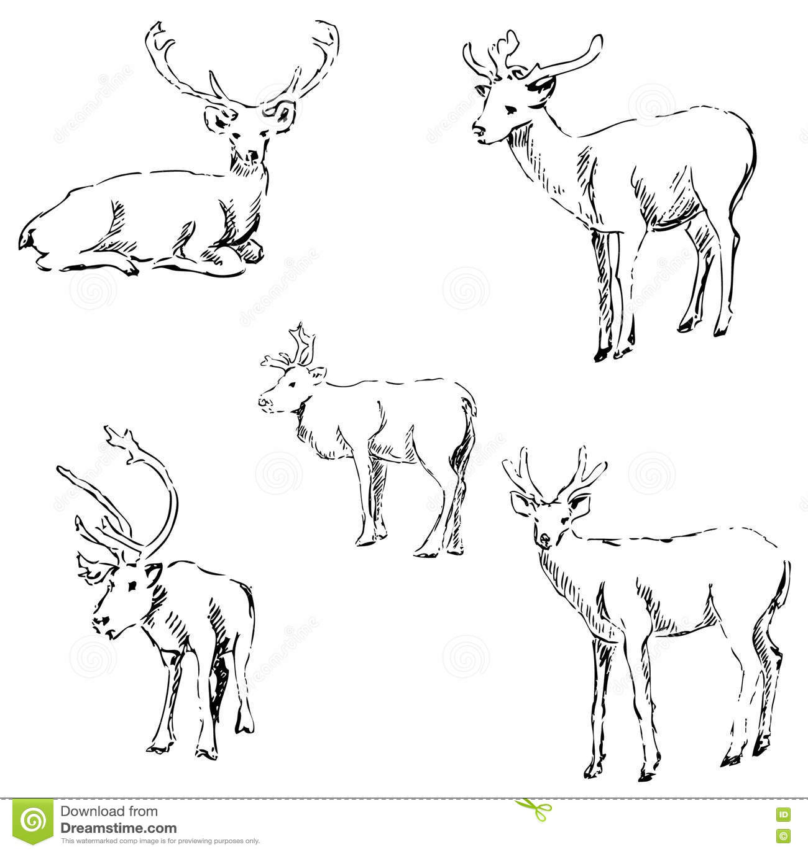Schizzo Dei Cervi Disegno A Matita A Mano Illustrazione Vettoriale