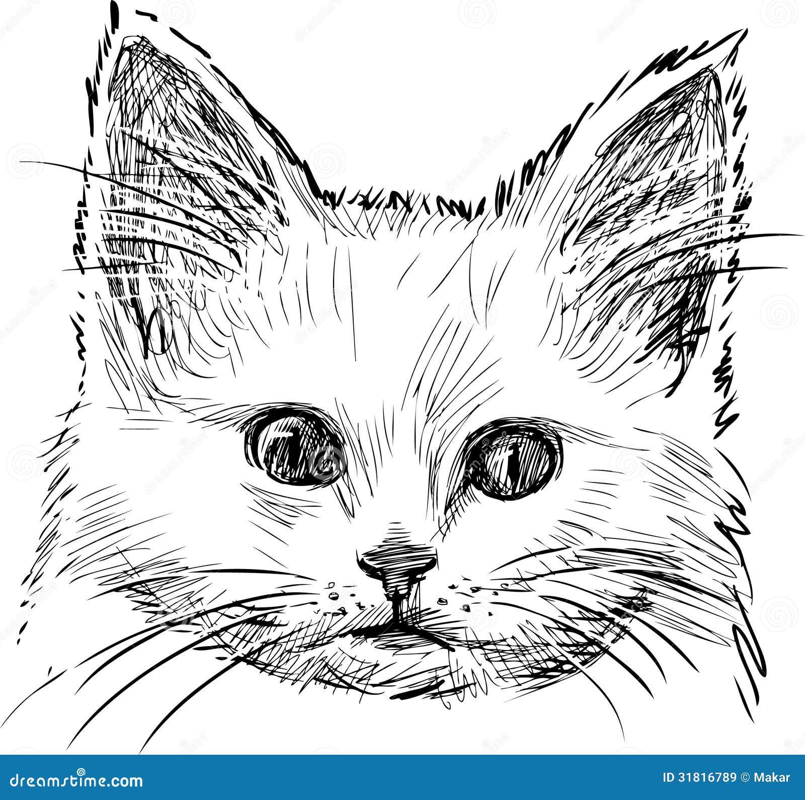Schizzo del gattino immagine stock immagine di cute for Immagini gatti da colorare