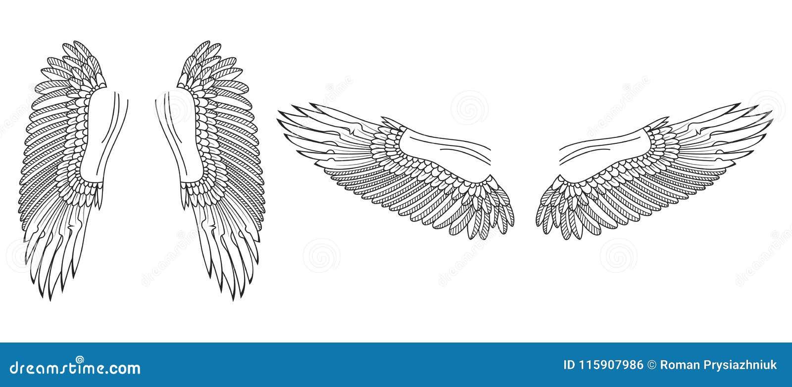 Schizzo Delle Ali Uccello O Ali Disegnate A Mano Di Angelo Vettore
