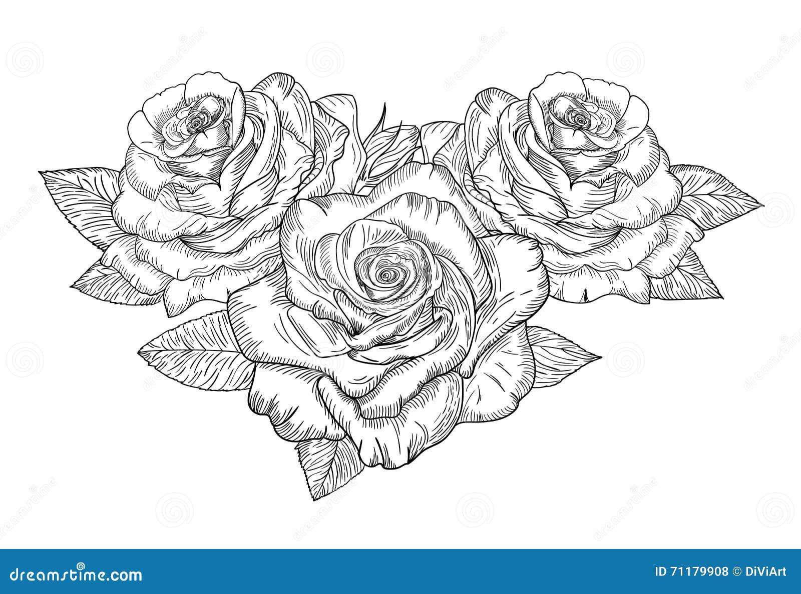 Schizzo di vettore delle rose illustrazione vettoriale - Immagini da colorare di rose ...