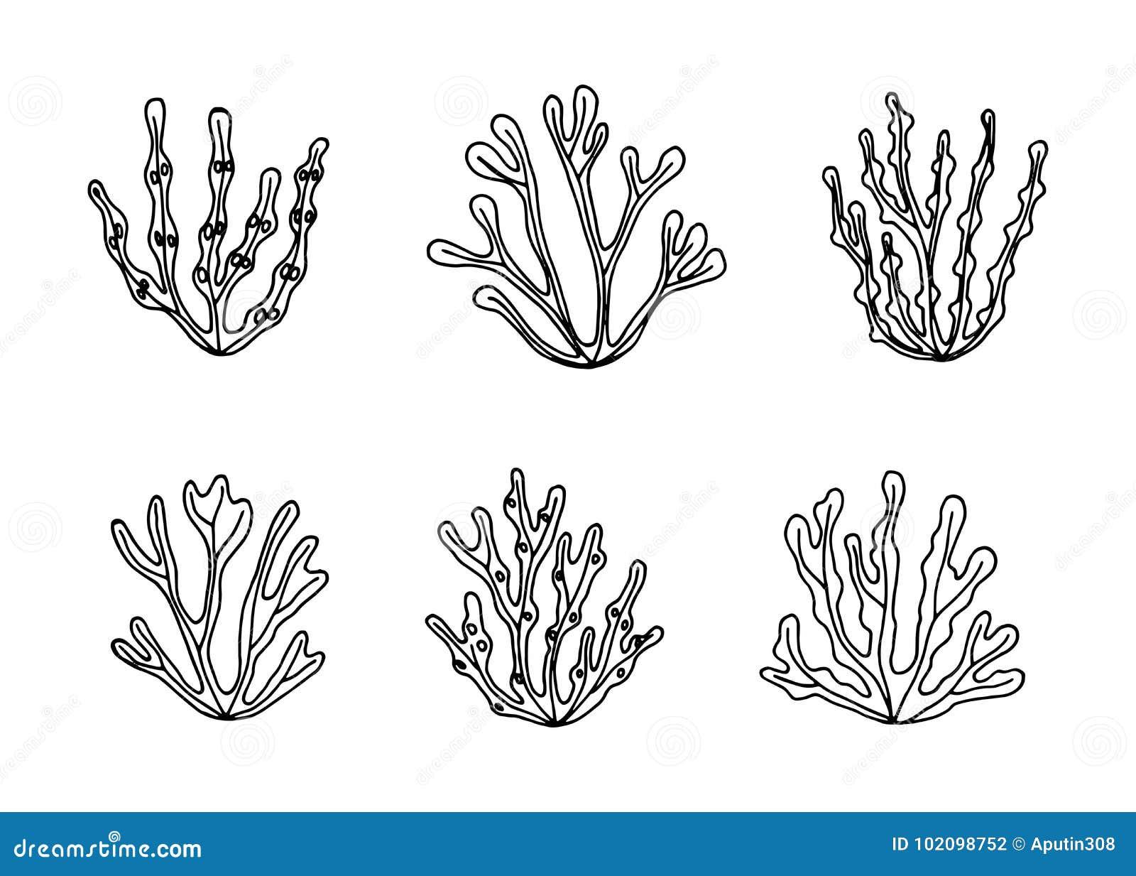 Schizzo Subacqueo Commestibile Di Vettore Delle Alghe Del Mare