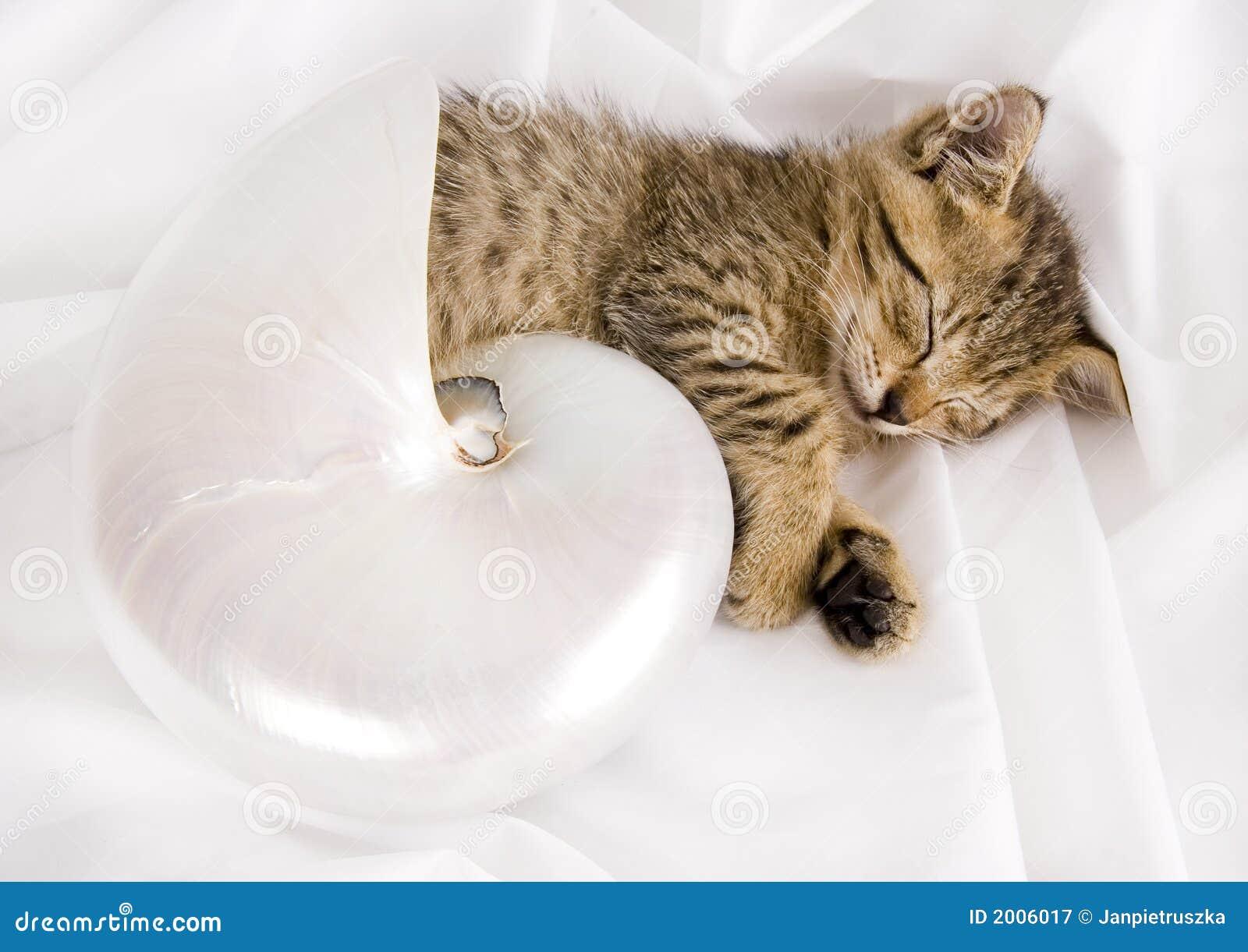 Schläfrige Katze