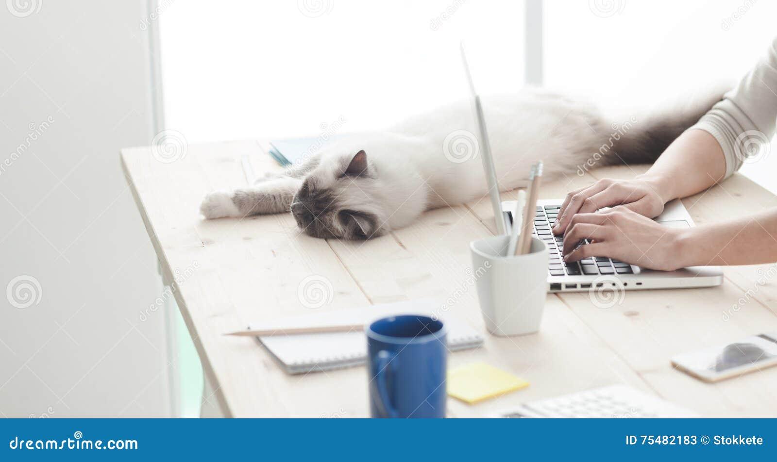 Schläfrige Katze auf einem Desktop