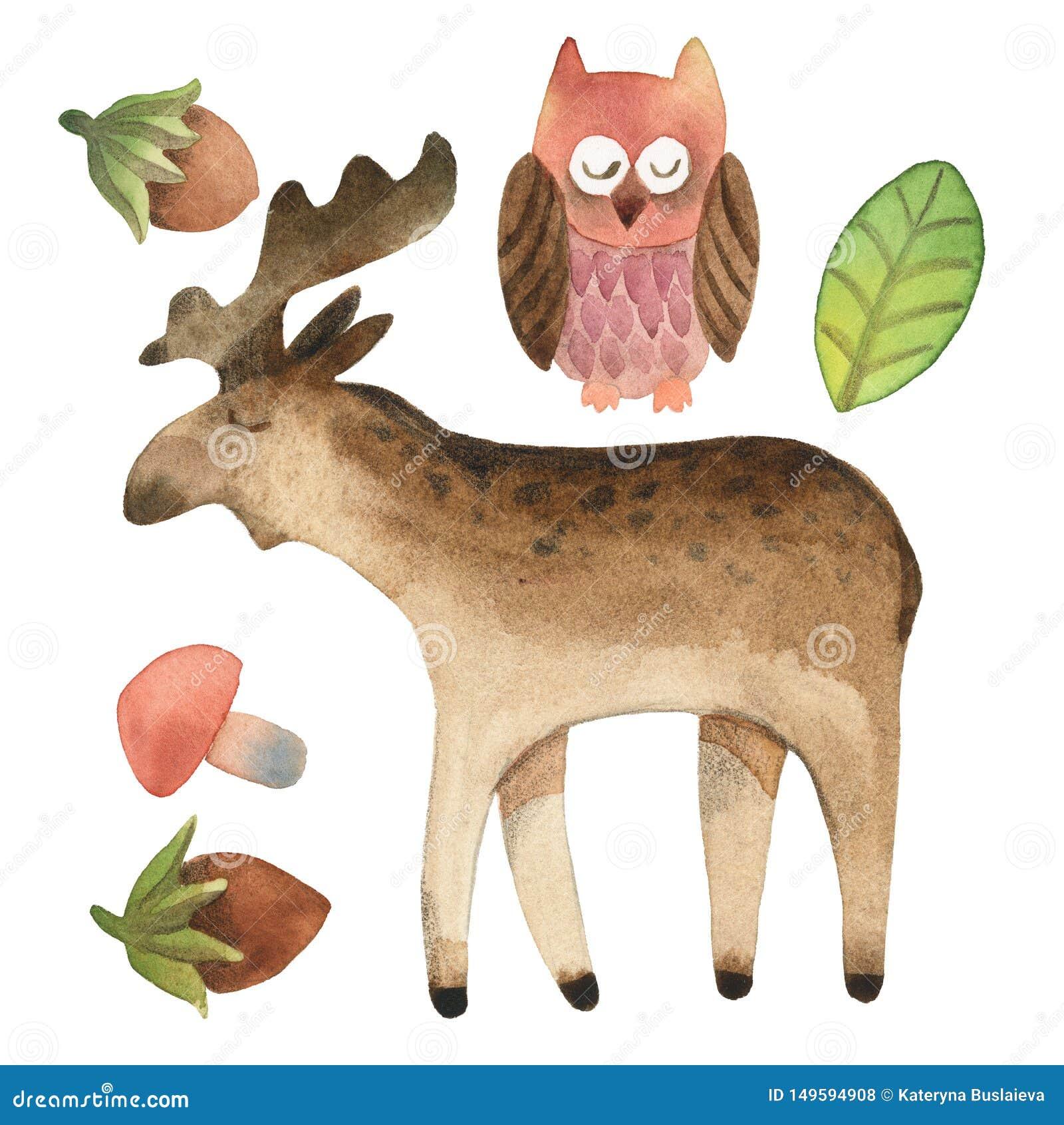 Schl?friger netter Steinkauz und Elche mit dem Blatt, Haselnuss und Pilz lokalisiert auf wei?em Hintergrund