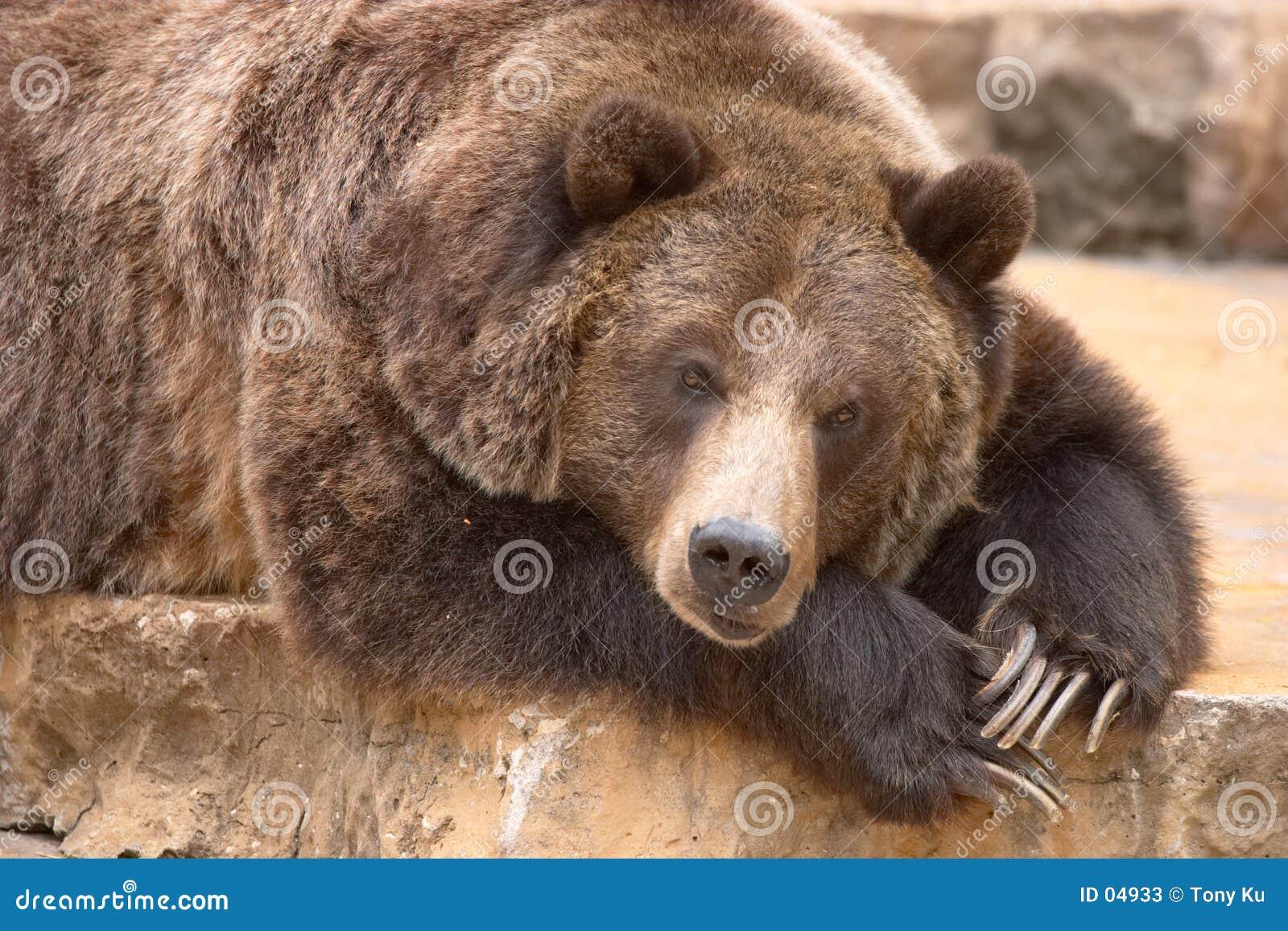 Download Schlafenbär stockbild. Bild von grizzly, ruhig, schlafen - 4933