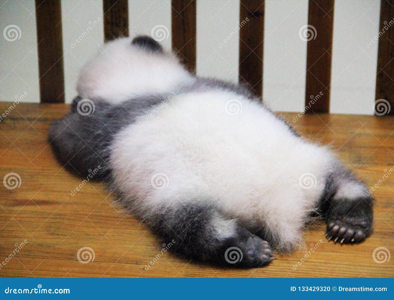 Schlafenbabypanda