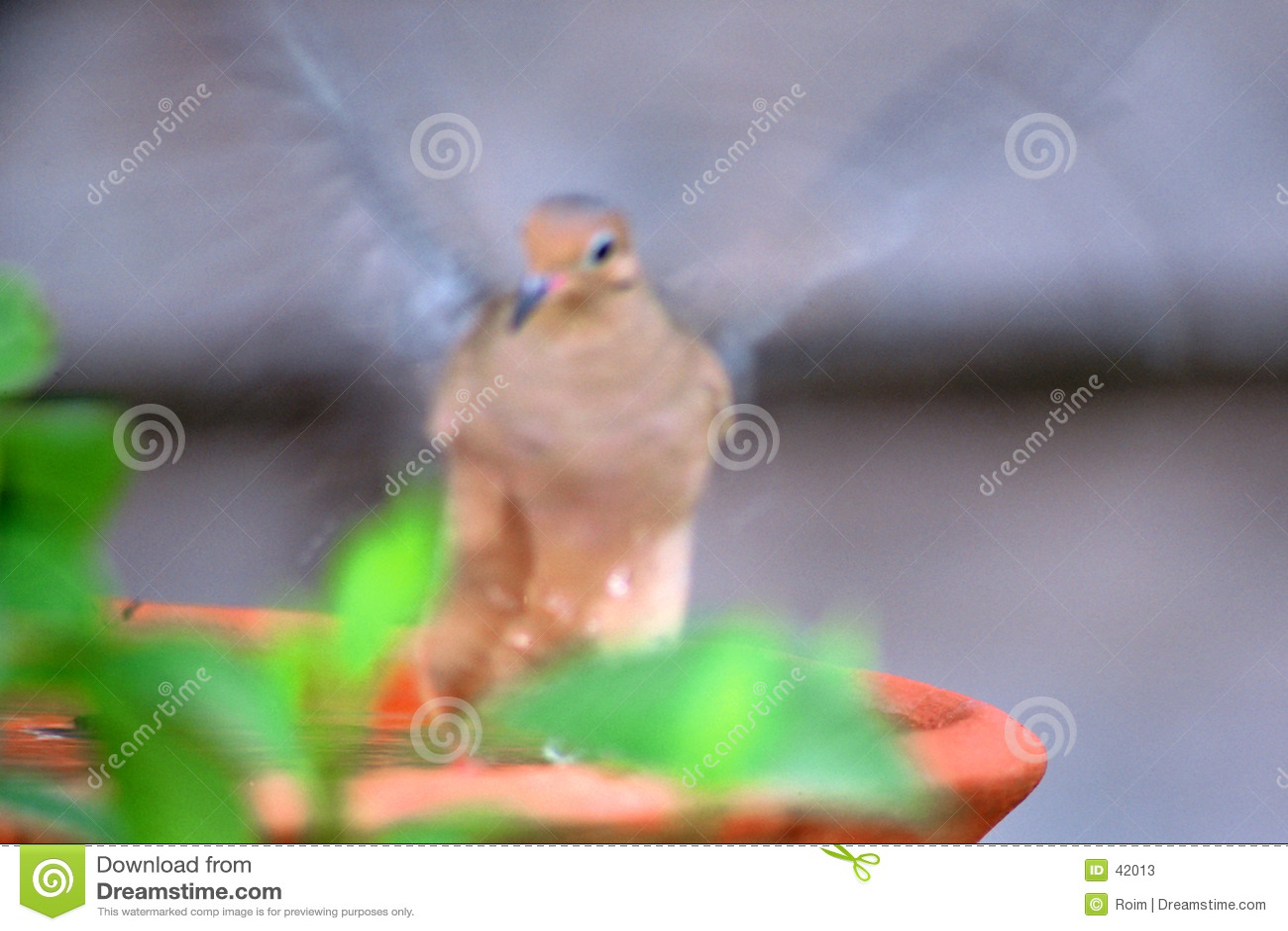Schlag am Vogel-Bad