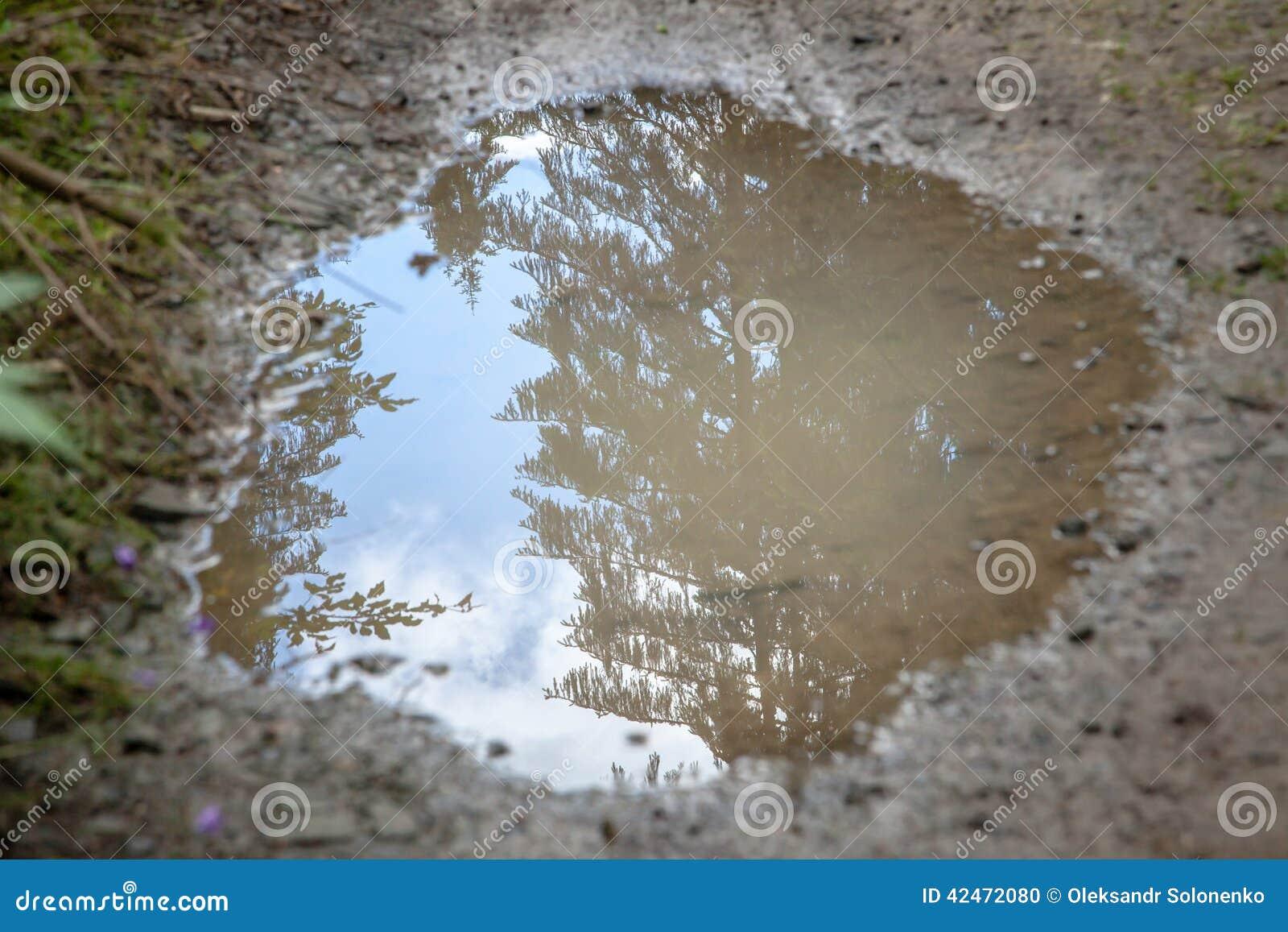 Schlammpfütze reflektierender Himmel und Evergreens