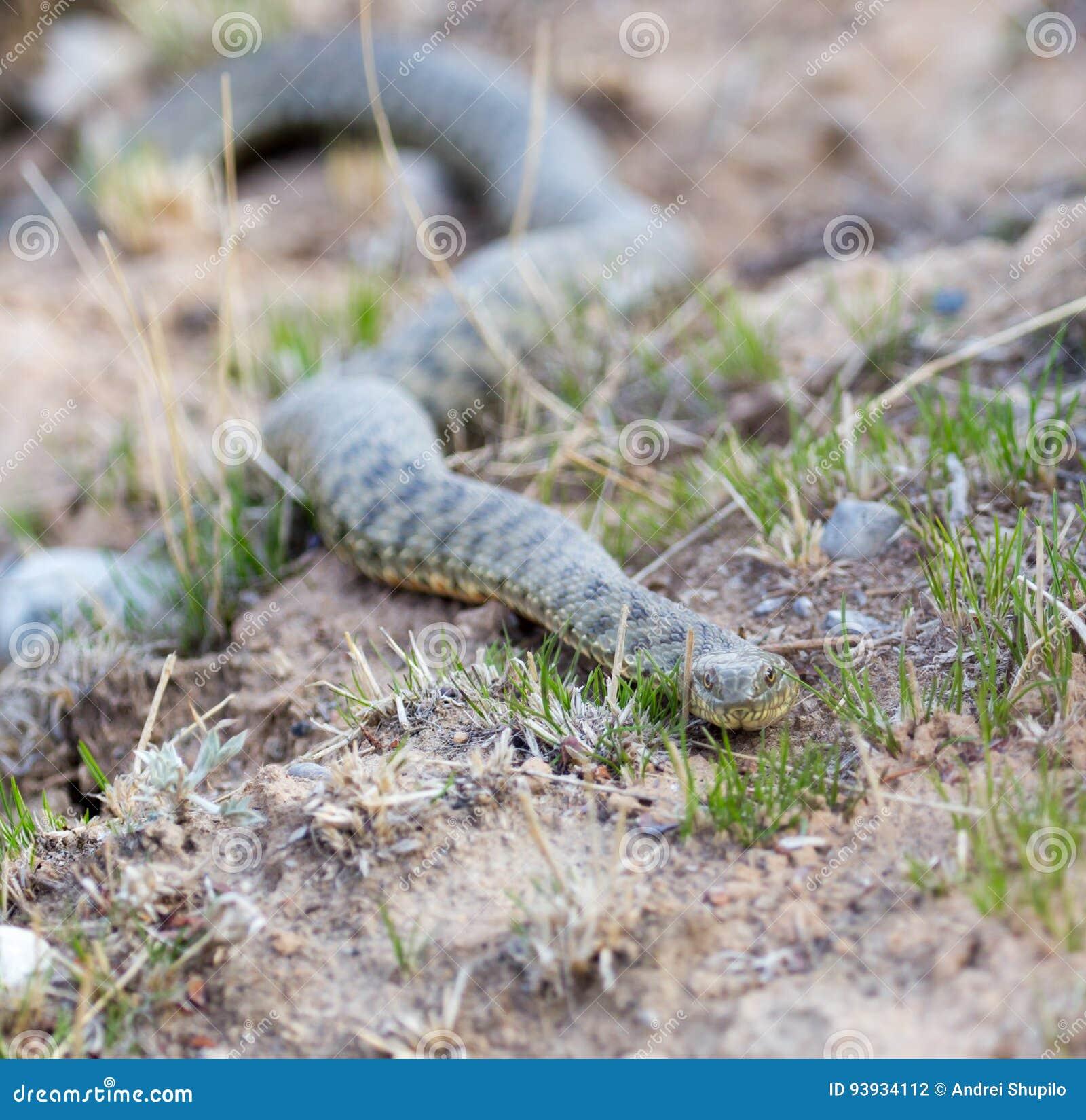 Schlange aus den Grund draußen