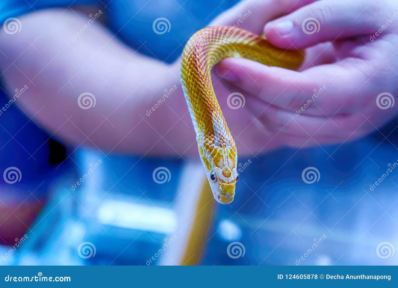 Schlange ist Haustier