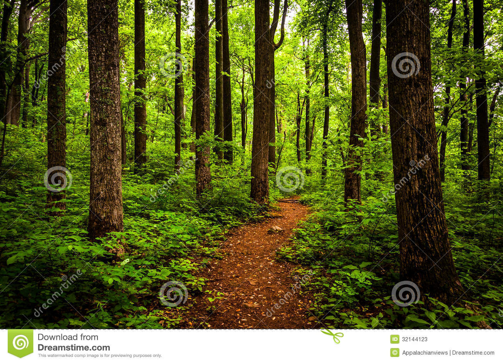Schleppen Sie durch hohe Bäume in einem üppigen Wald, Nationalpark Shenandoah