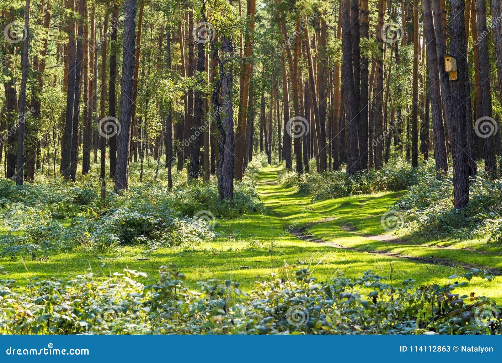 Schleppen Sie Im Wald, Sonniges Wetter, Straße Zum Abenteuer ...