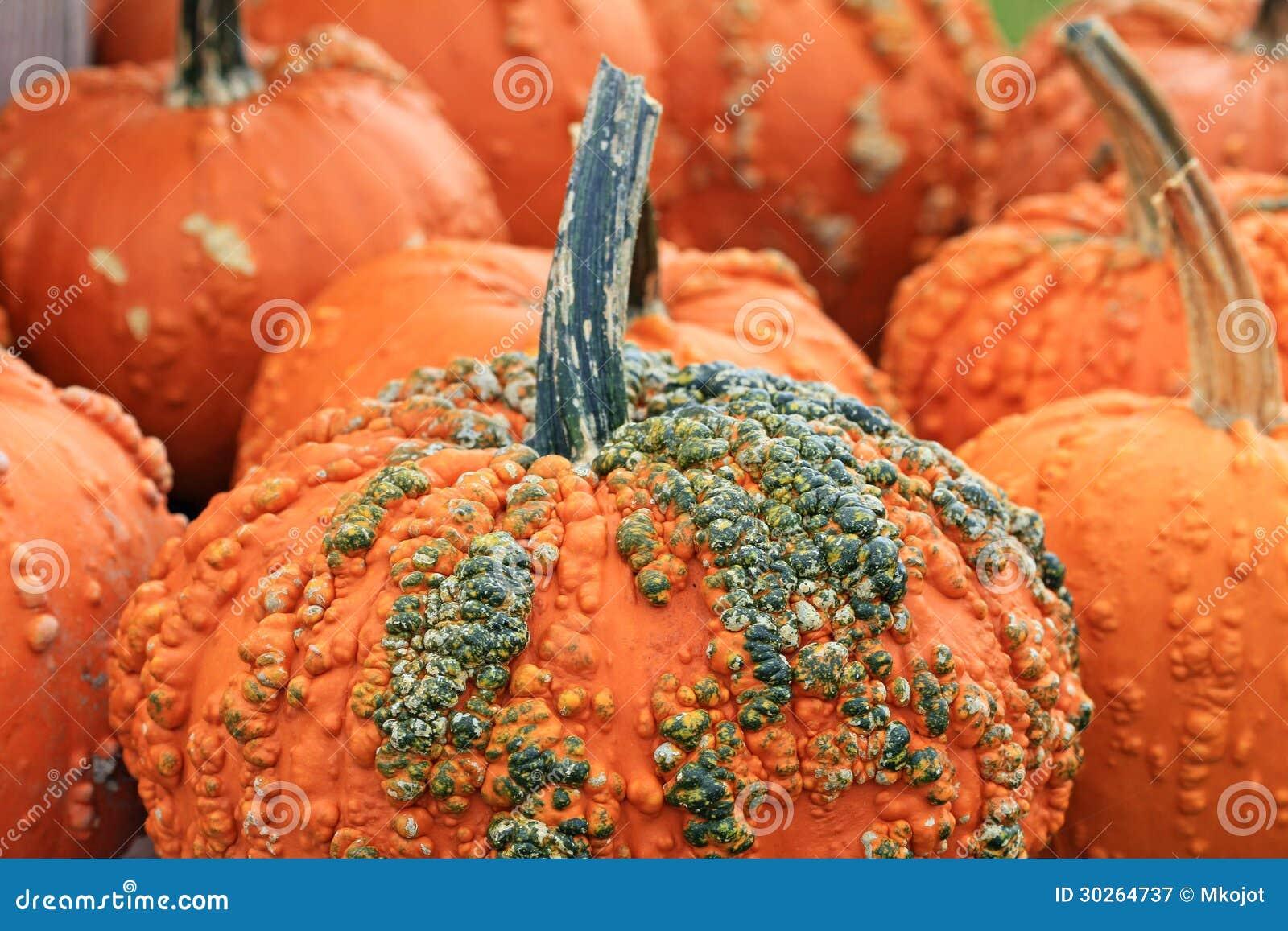 Schließen sie herauf bild der orange dekorativen kürbise