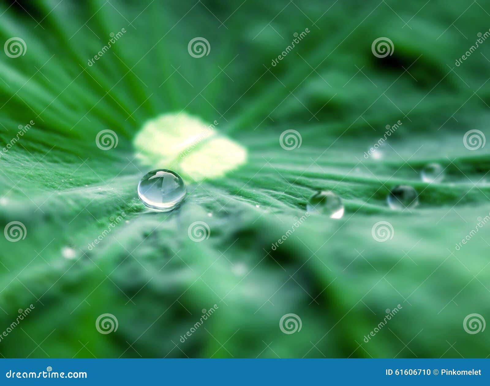 Schließen Sie herauf selektiven Fokus des Wassertropfens auf Lotosblatt