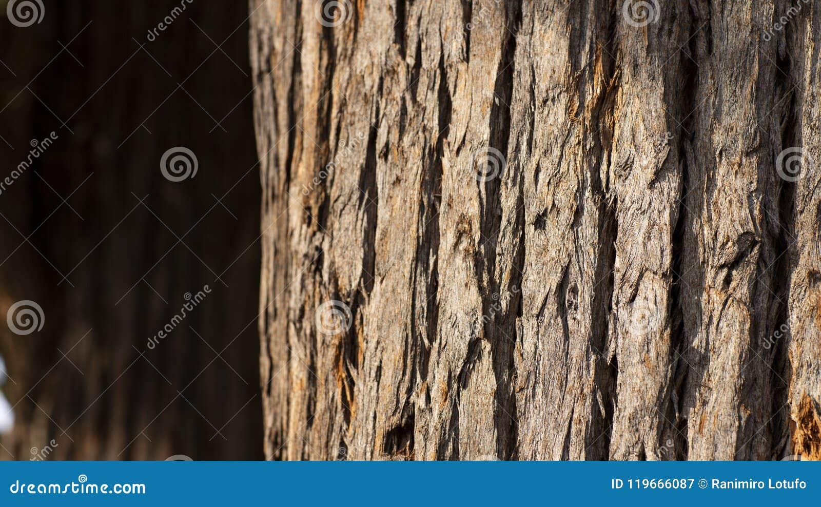 Schließen Sie oben vom Baumstamm und von seiner strukturierten Barke