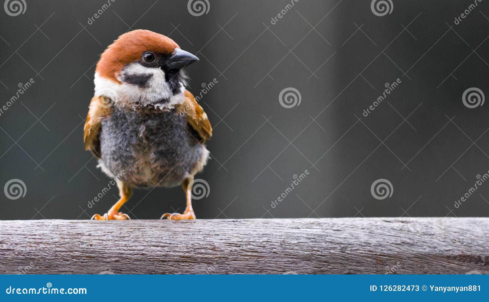 Schließen Sie oben vom kleinen Vogel