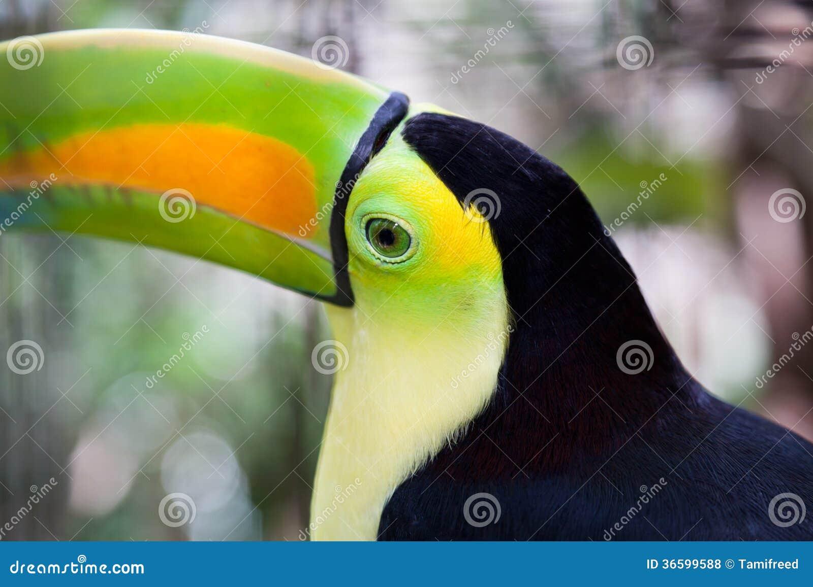Schwarze und gelbe federn gestalten grüne und gelbe haut um ein grün