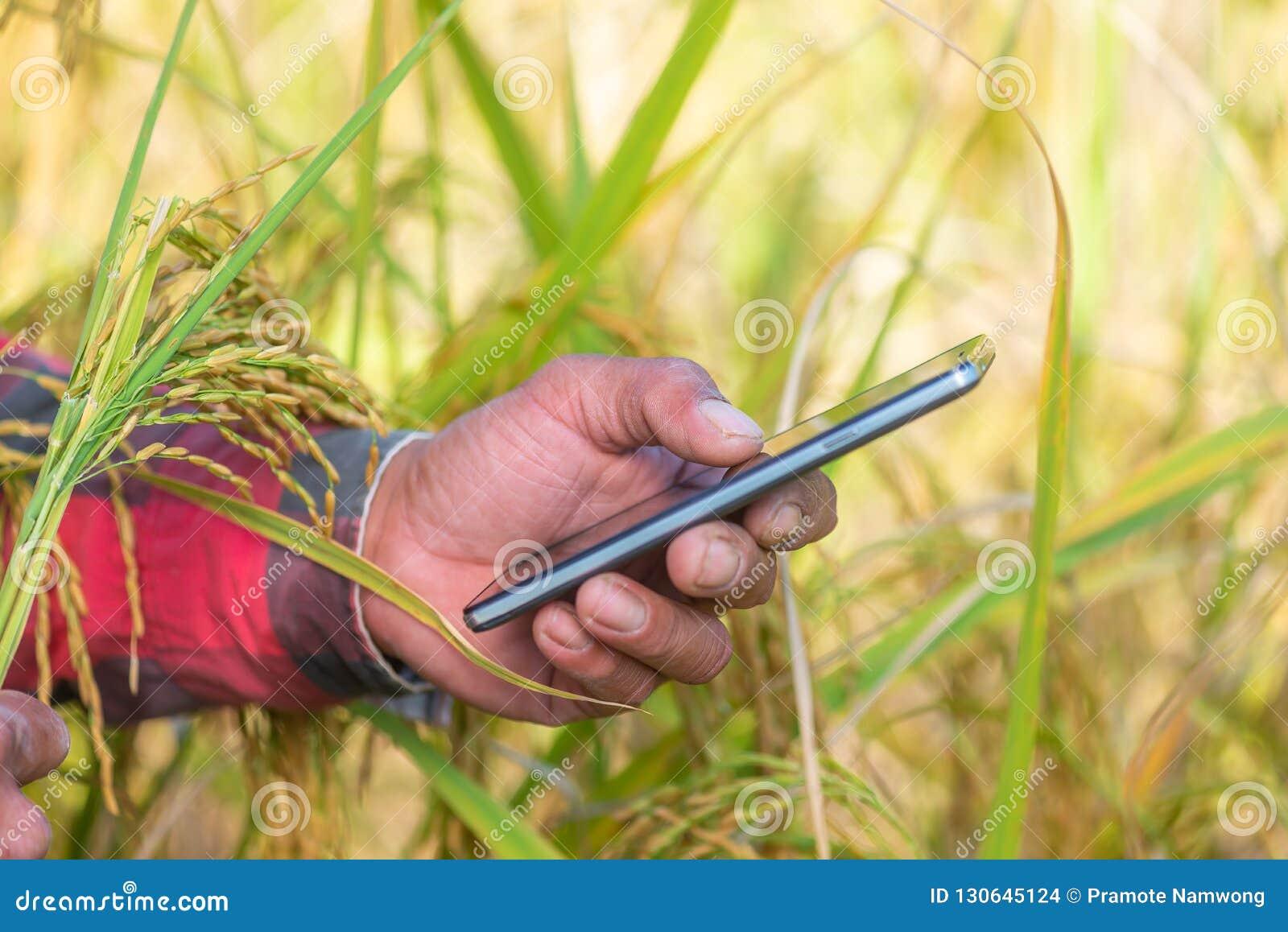 Schließen Sie oben von der Landwirthand unter Verwendung des Handys oder Tablette, die herein stehen