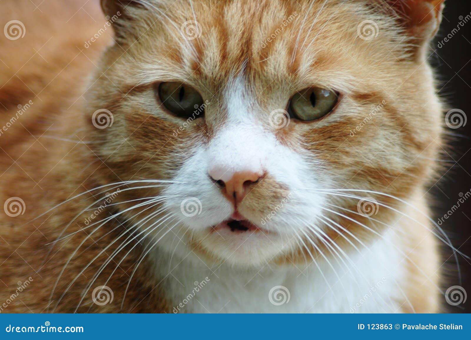 Schließen Sie oben von einer aktiven Katze