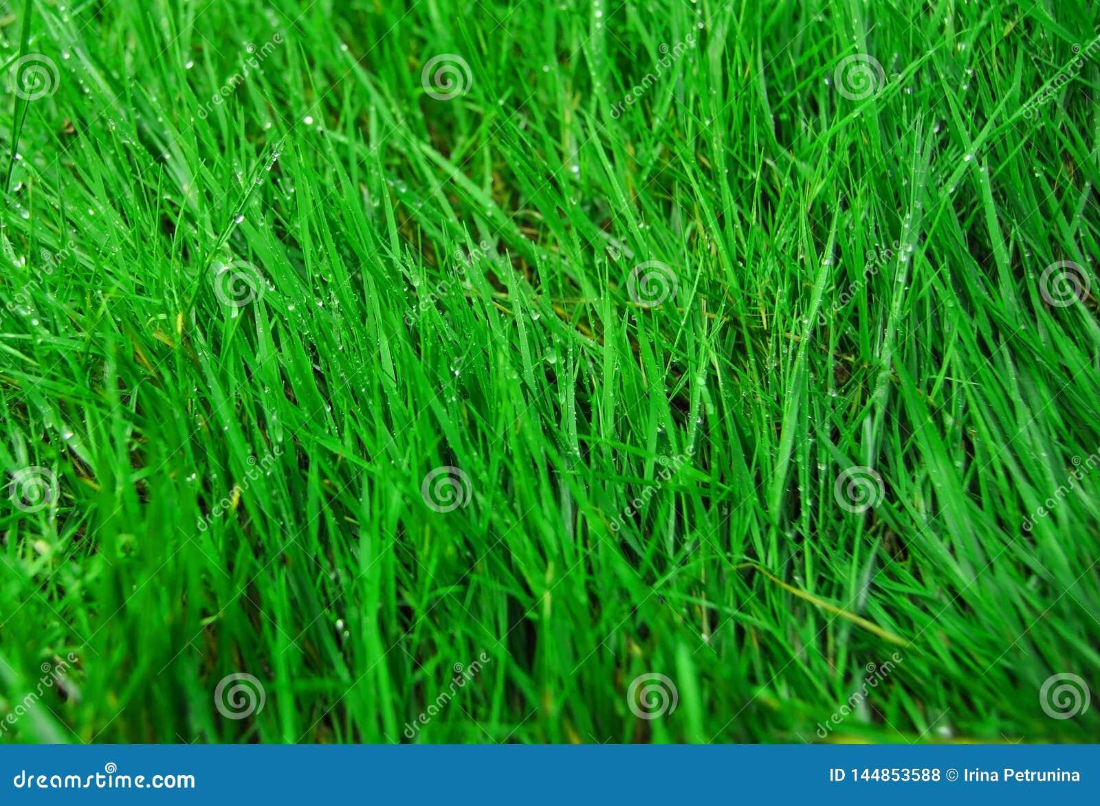 Schlie?en Sie herauf gr?nes Gras