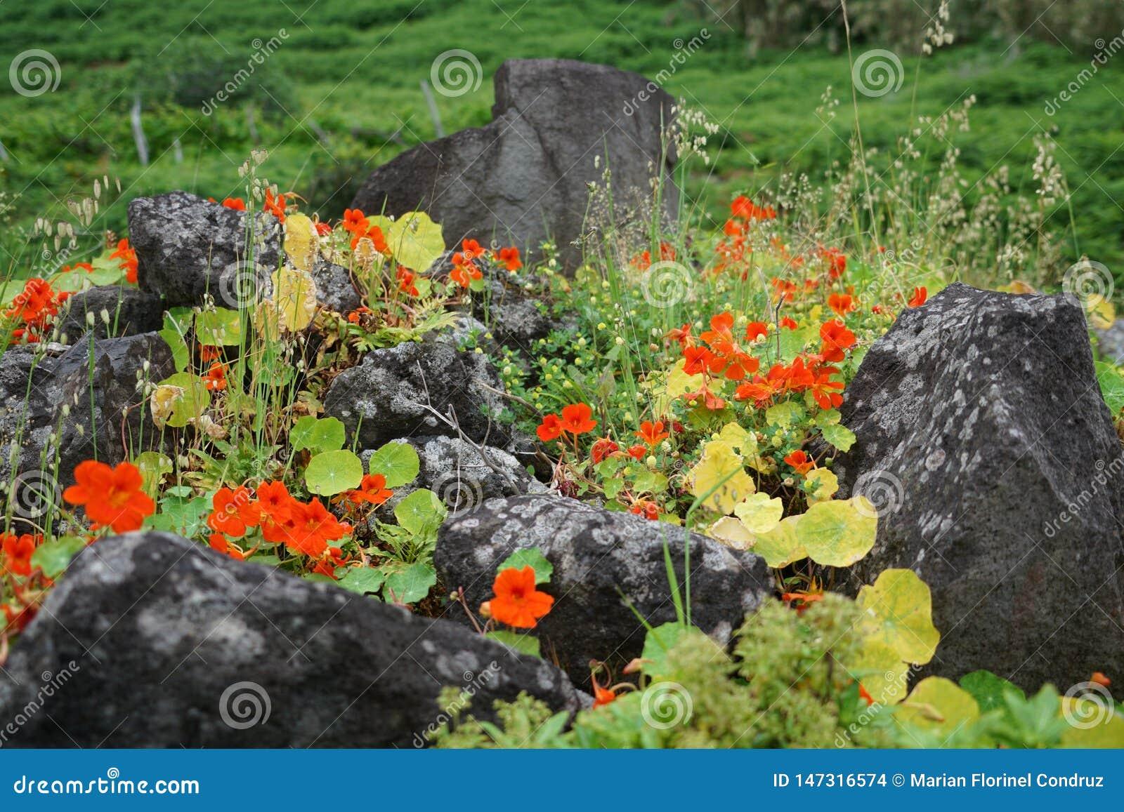 Schlie?en Sie oben mit spezifischer Vegetation Madeiras