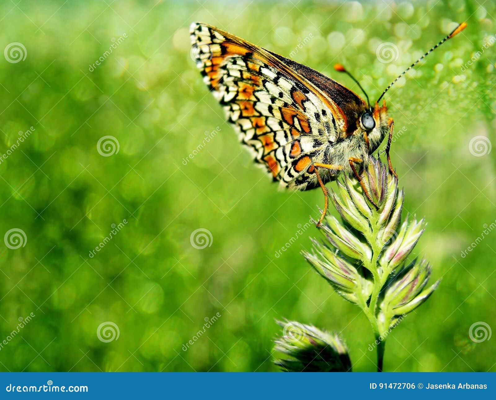 Schmetterling auf dem Gras