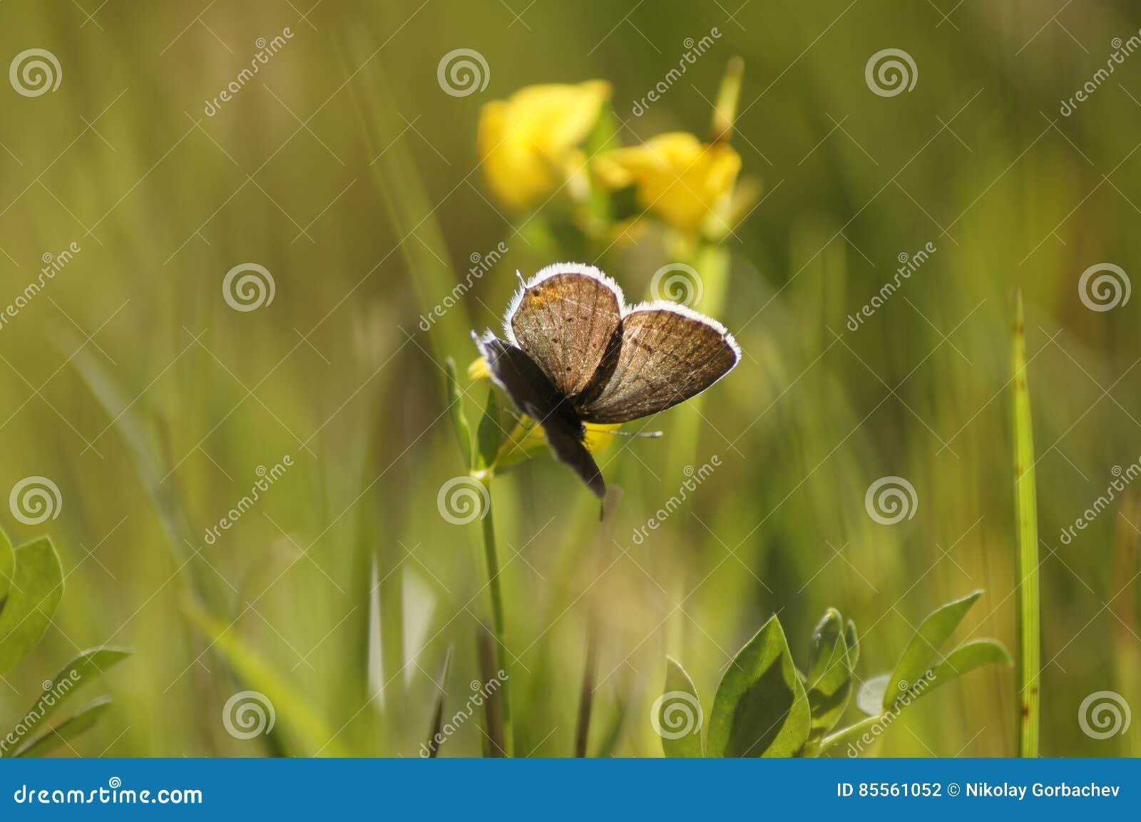 Schmetterling auf einer Sommerwiese