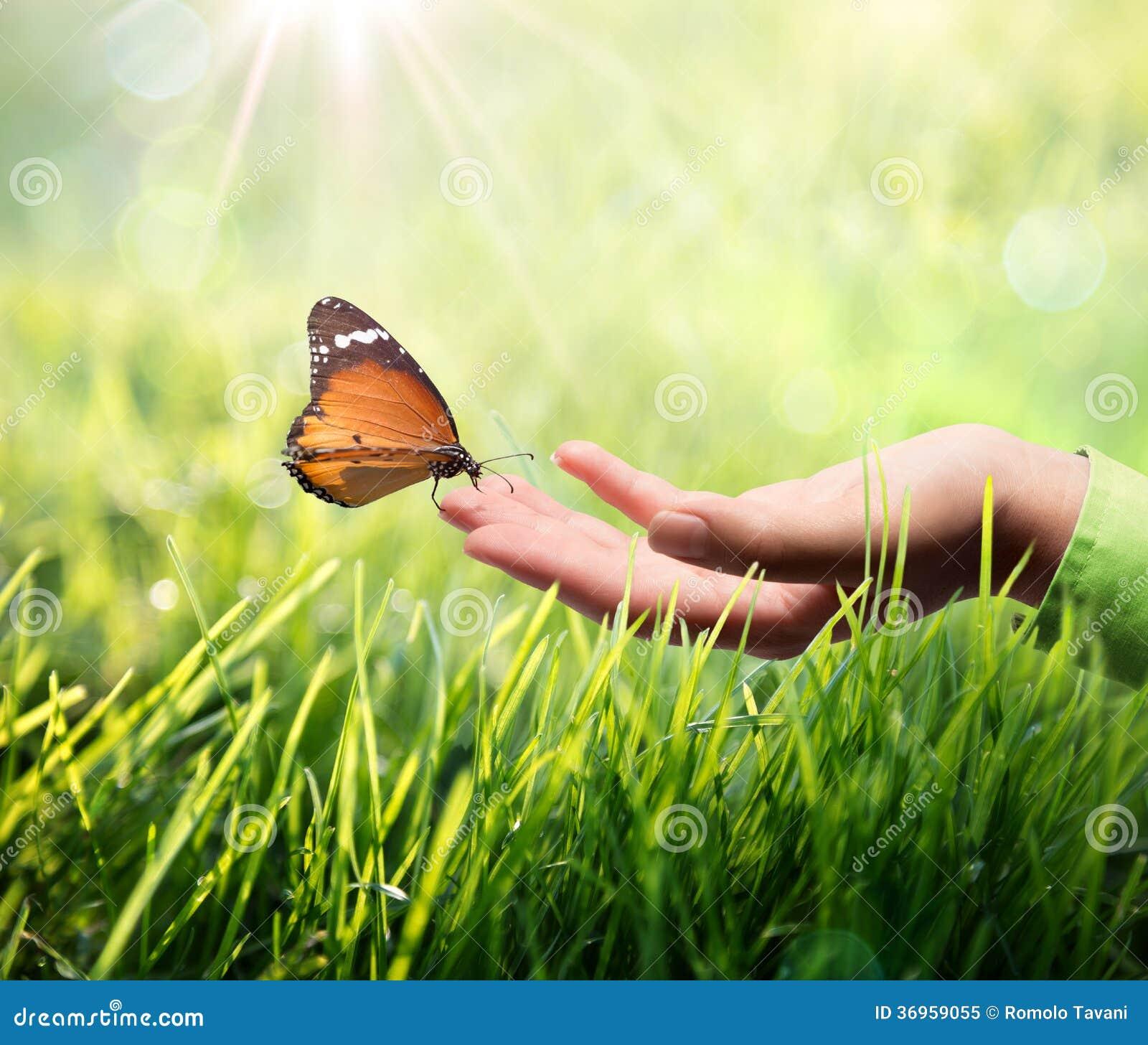 Schmetterling in der Hand auf Gras