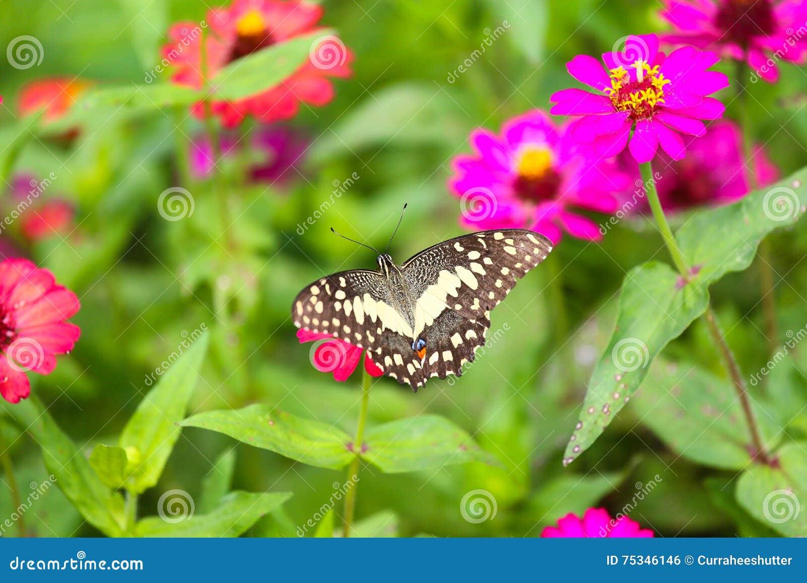 Blumen schmetterlinge im garten for Blumen fliegen