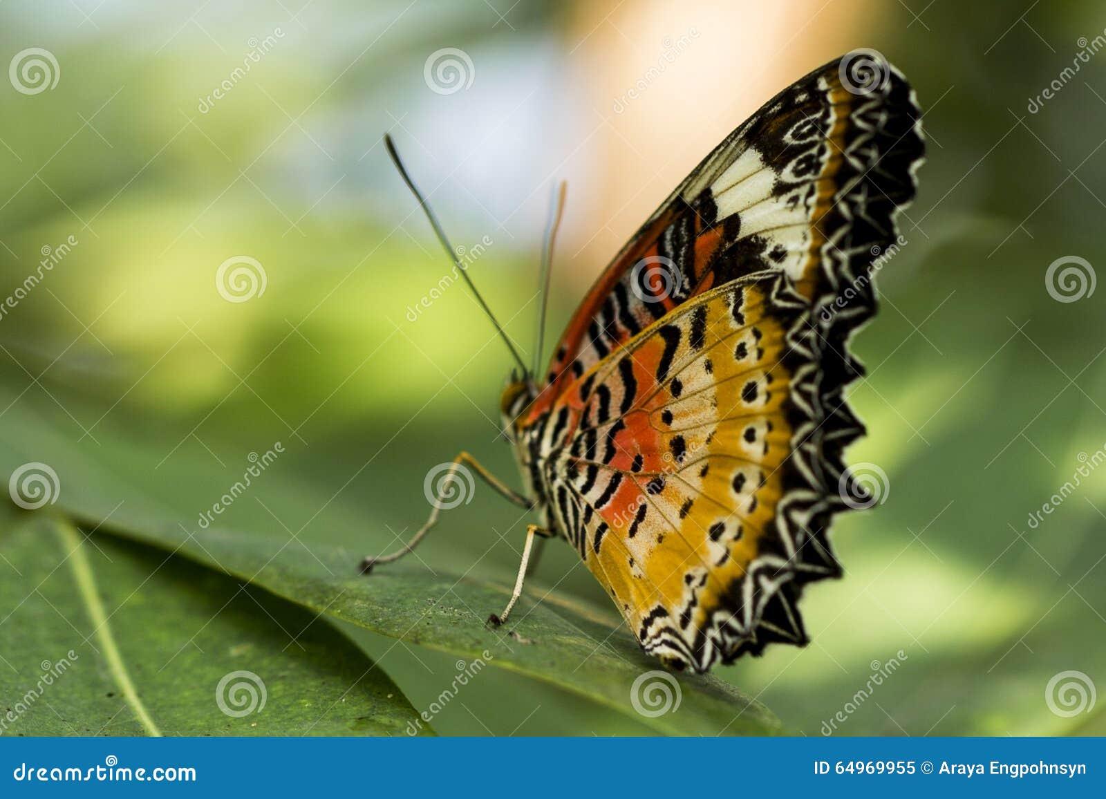 schmetterling mit schwarz orange fl geln stockbild bild von nderung monarch 64969955. Black Bedroom Furniture Sets. Home Design Ideas