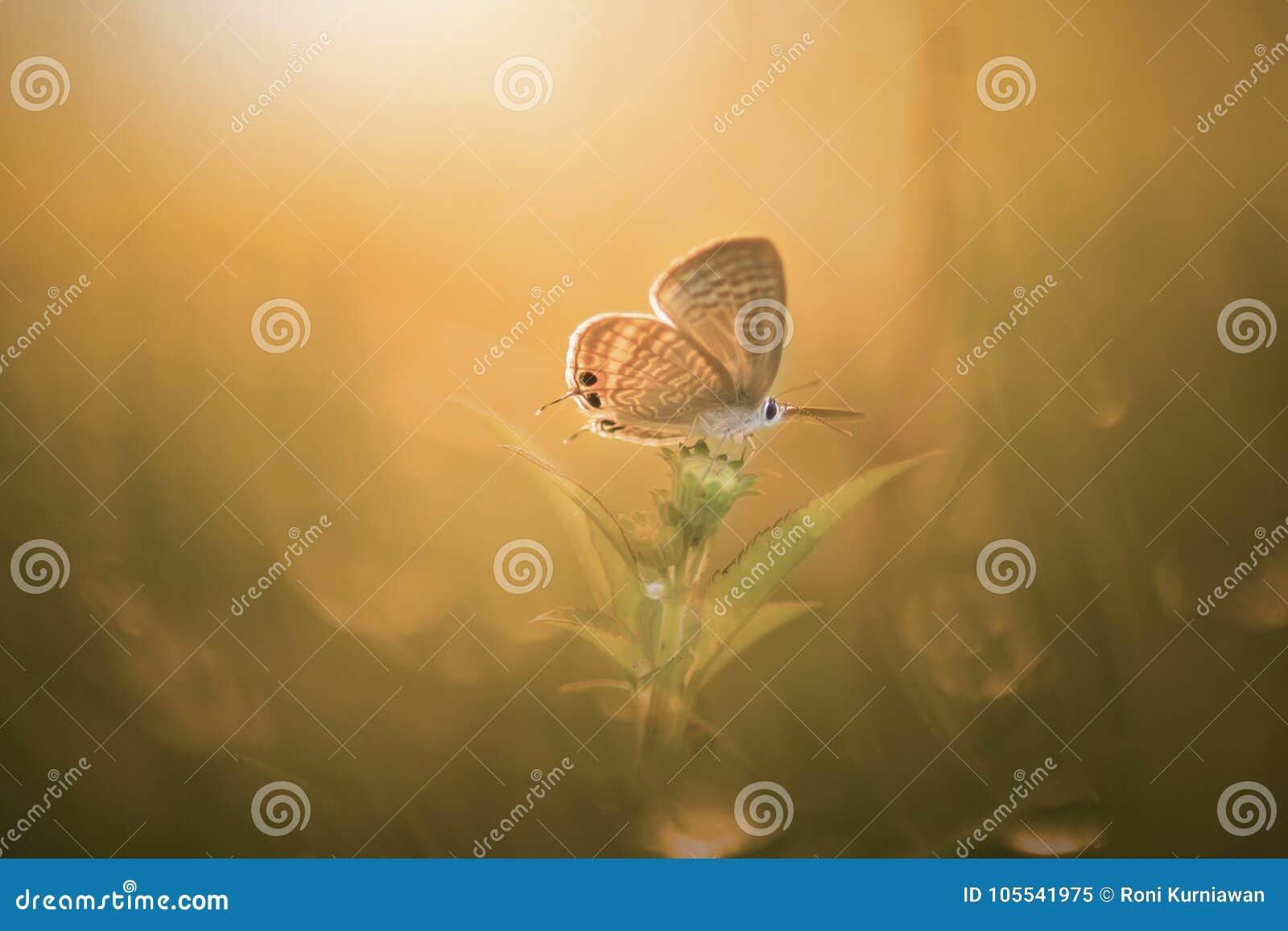 Schmetterling, Tiere, Makro, bokeh, Insekt, Natur,