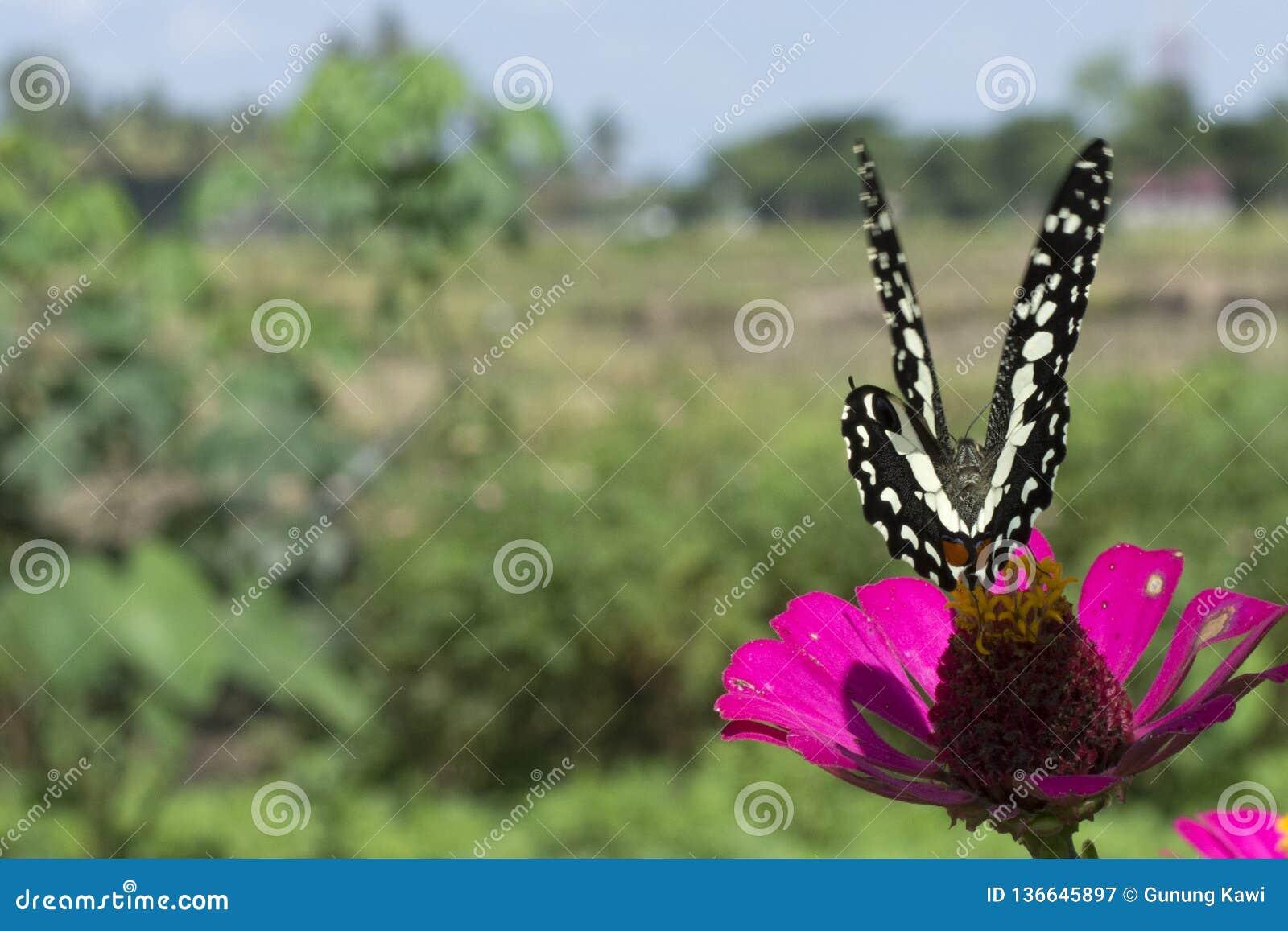 Schmetterlinge in einem schönen Blumengarten