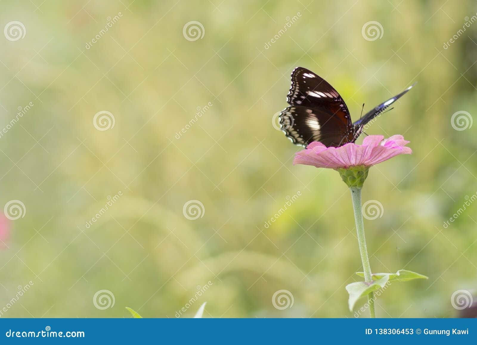 Schmetterlinge im Blumengarten