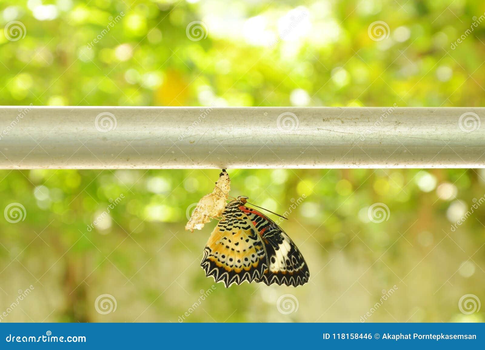 Fliegen kokon