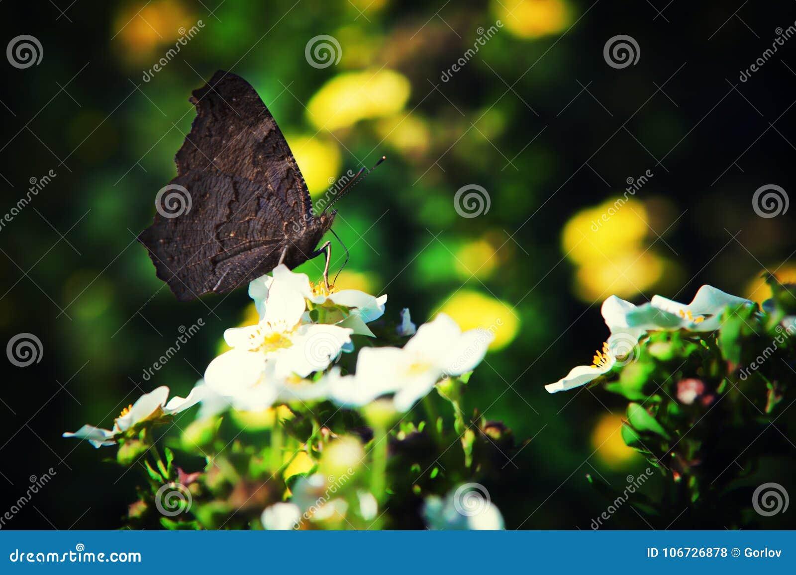 Schmetterlingssommernatur-Hintergrundmakro
