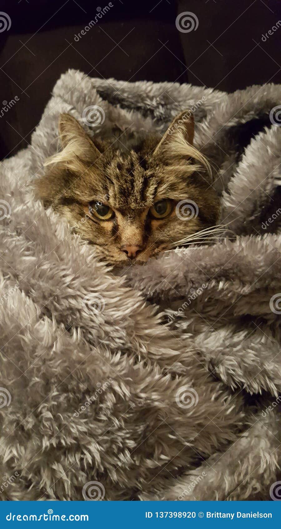 Schmiegt sich die Katze an
