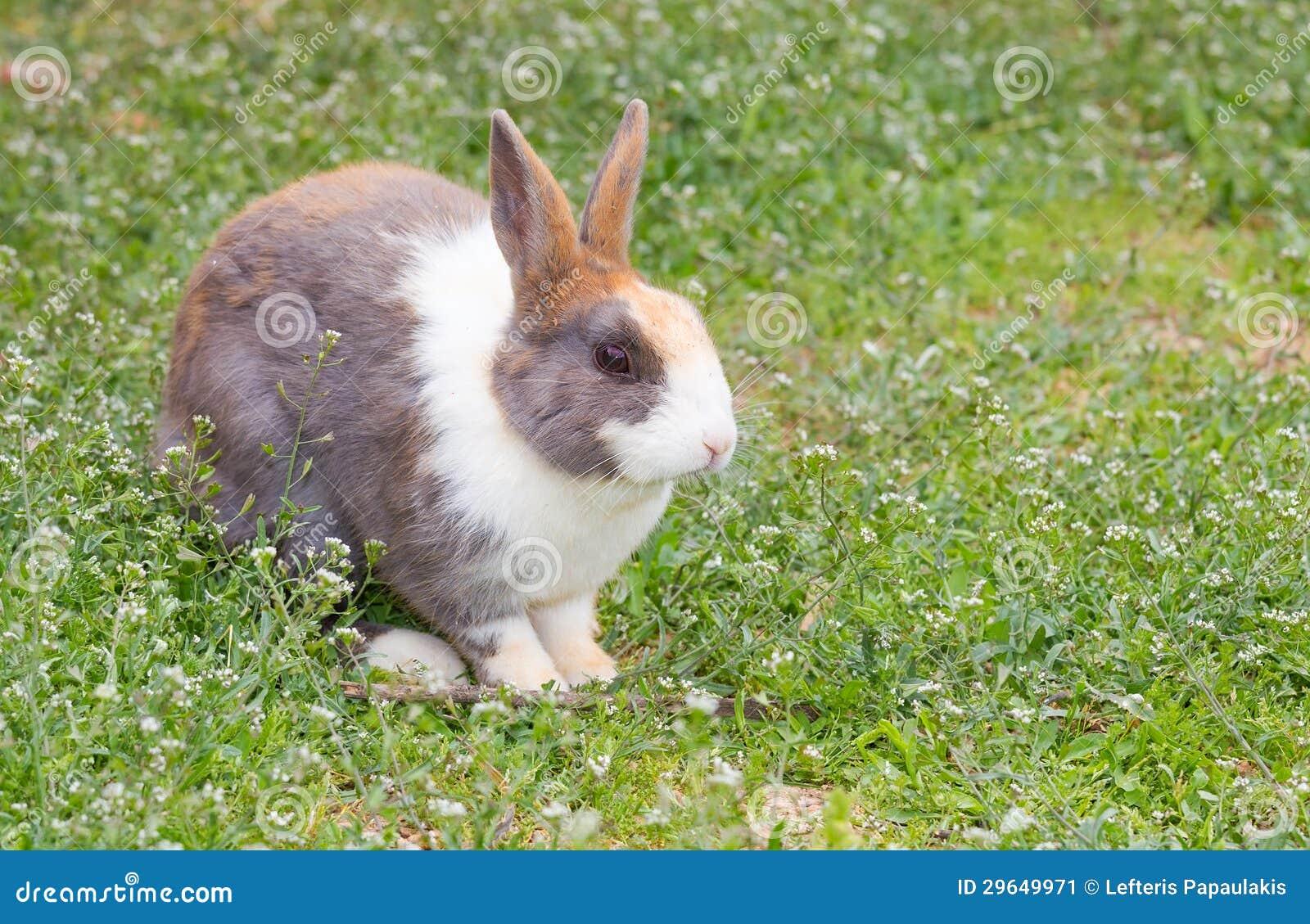 Schmutziges Kaninchen Im Garten Stockbild Bild Von Rasen Lepus