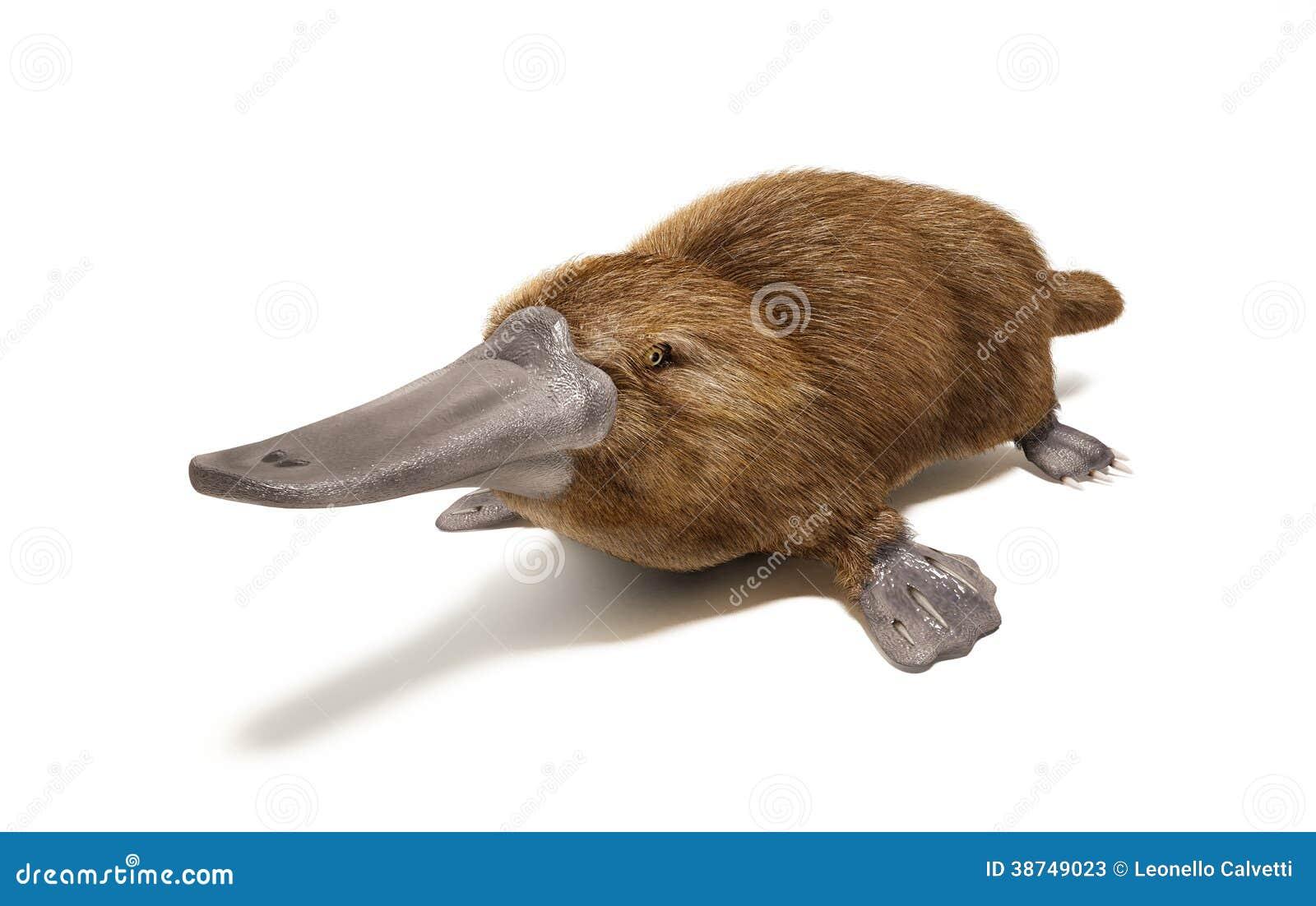 Schnabeltier Ente-berechnetes Tier. Stock Abbildung - Illustration ...