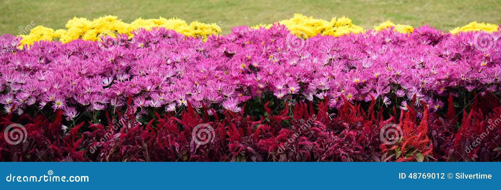 Schöne Blumen Im Garten Stockfoto - Bild: 48769012