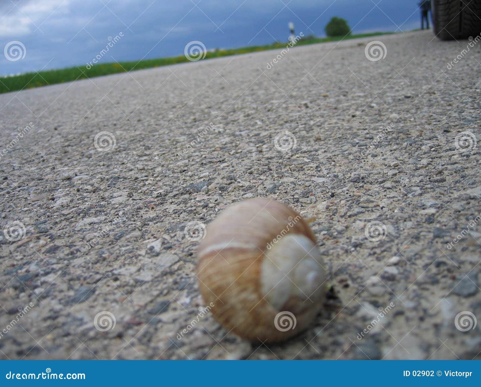 Schnecke auf der Straße