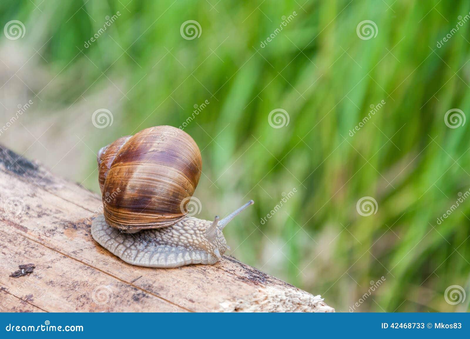 Schnecke auf einem Stück Holz