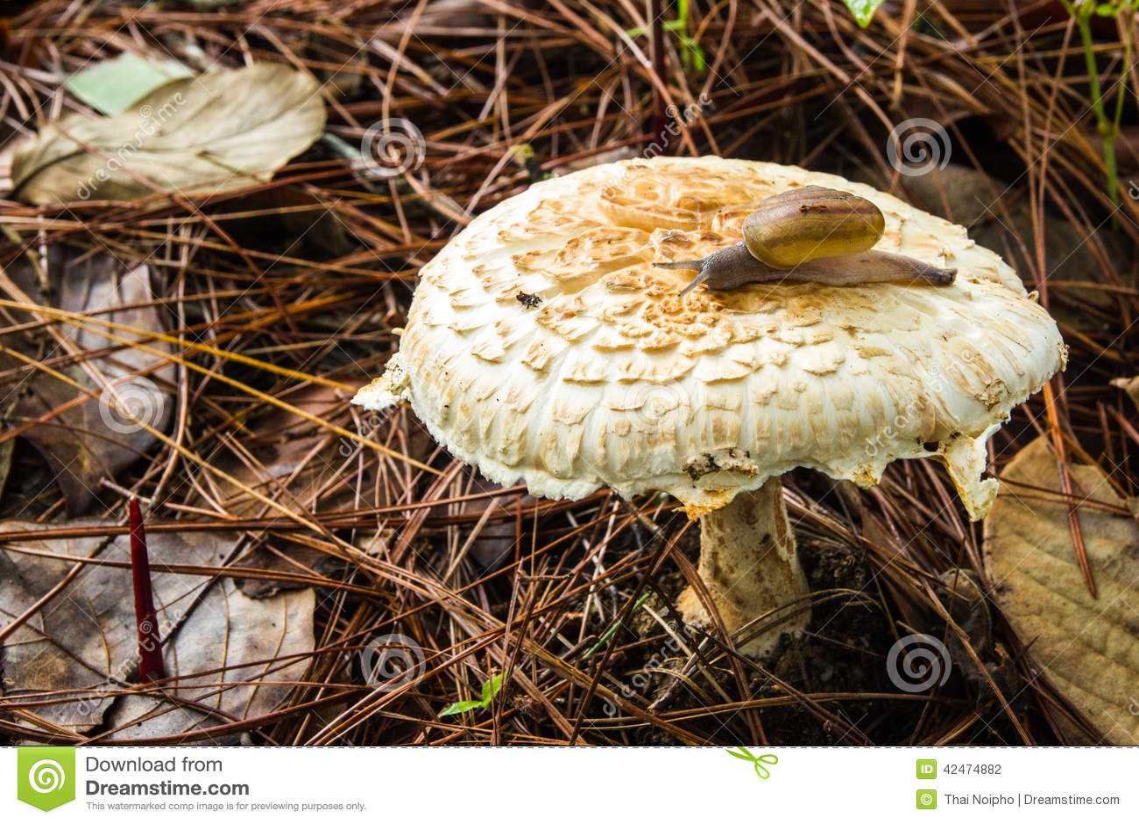 Schnecke, die auf Pilze kriecht