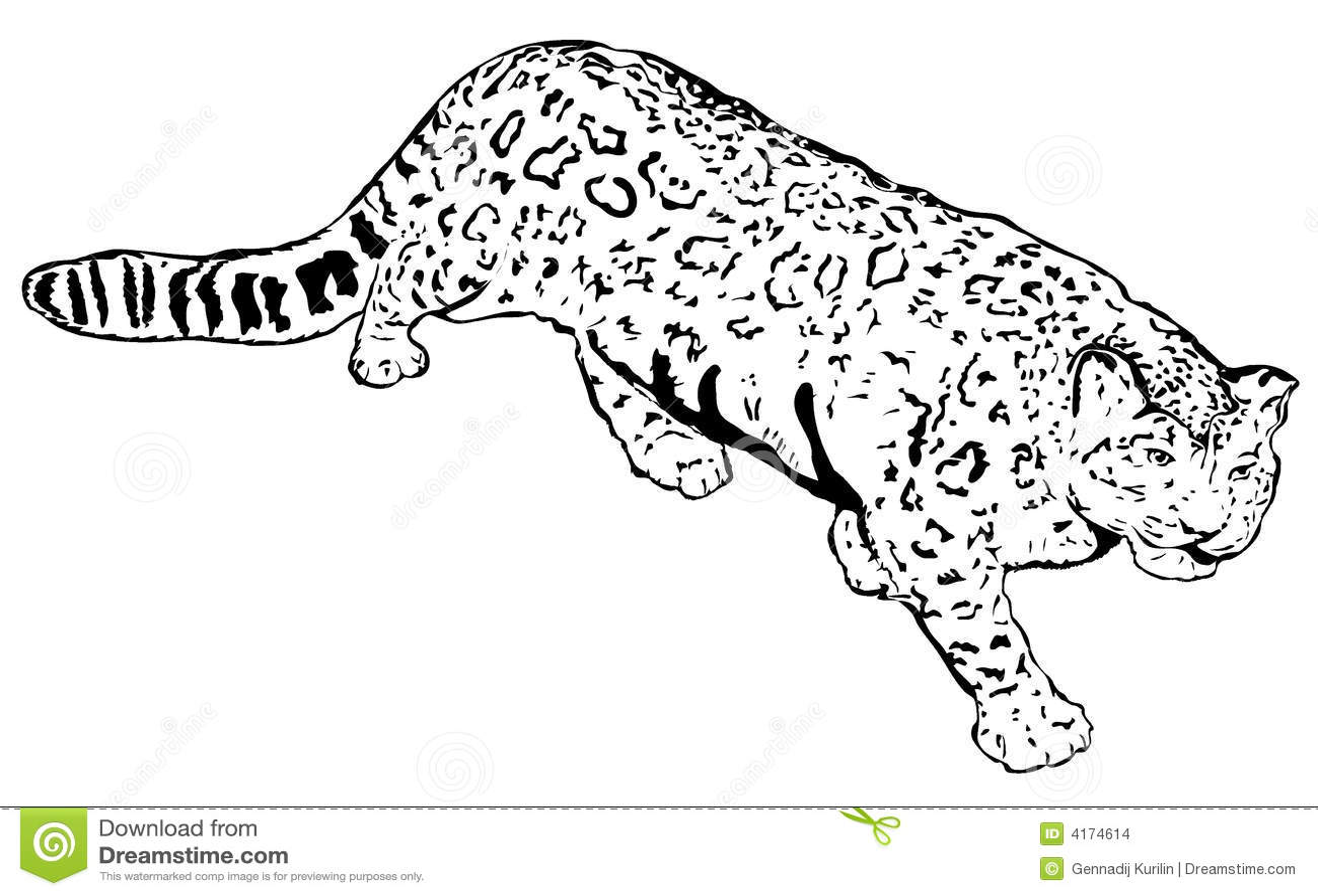 Schnee-Leopard