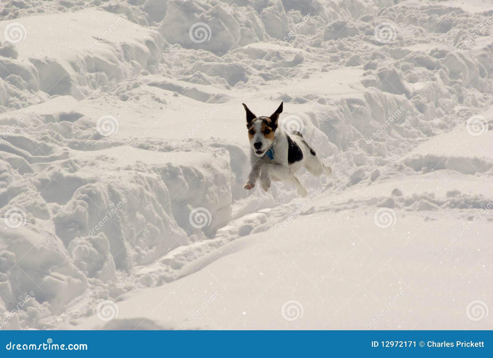 Schnee-Spaß